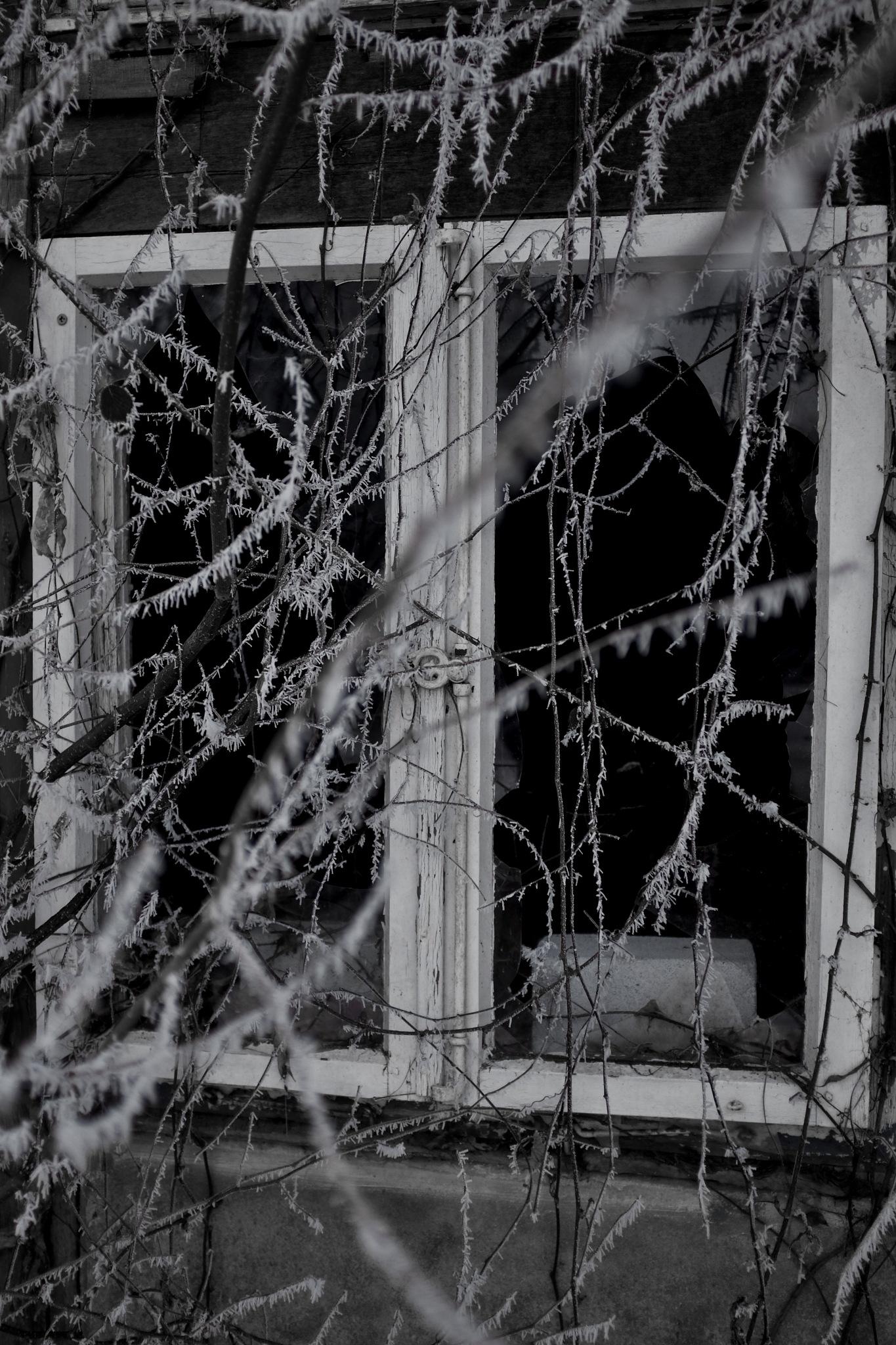 Fenster by peterkryzun