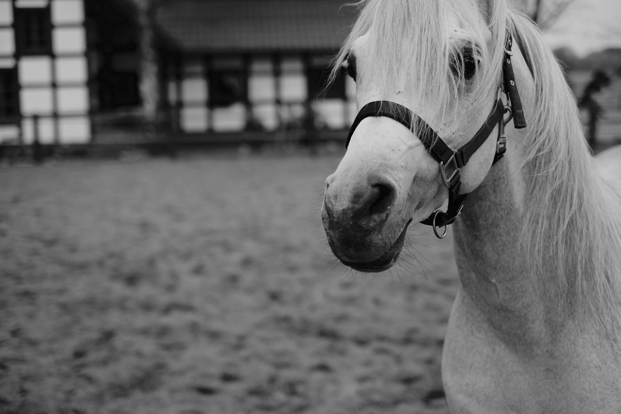 White Horse by peterkryzun