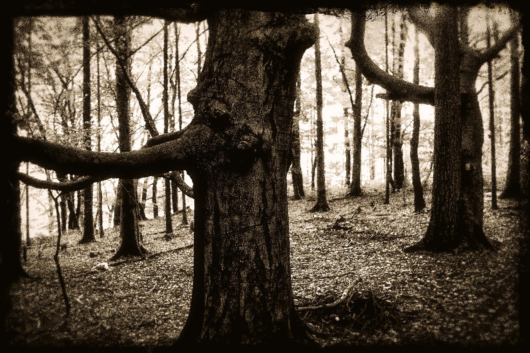 The Forest by peterkryzun