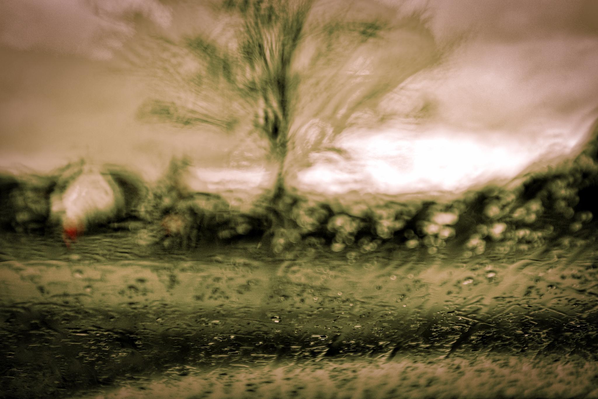 RAIN by peterkryzun