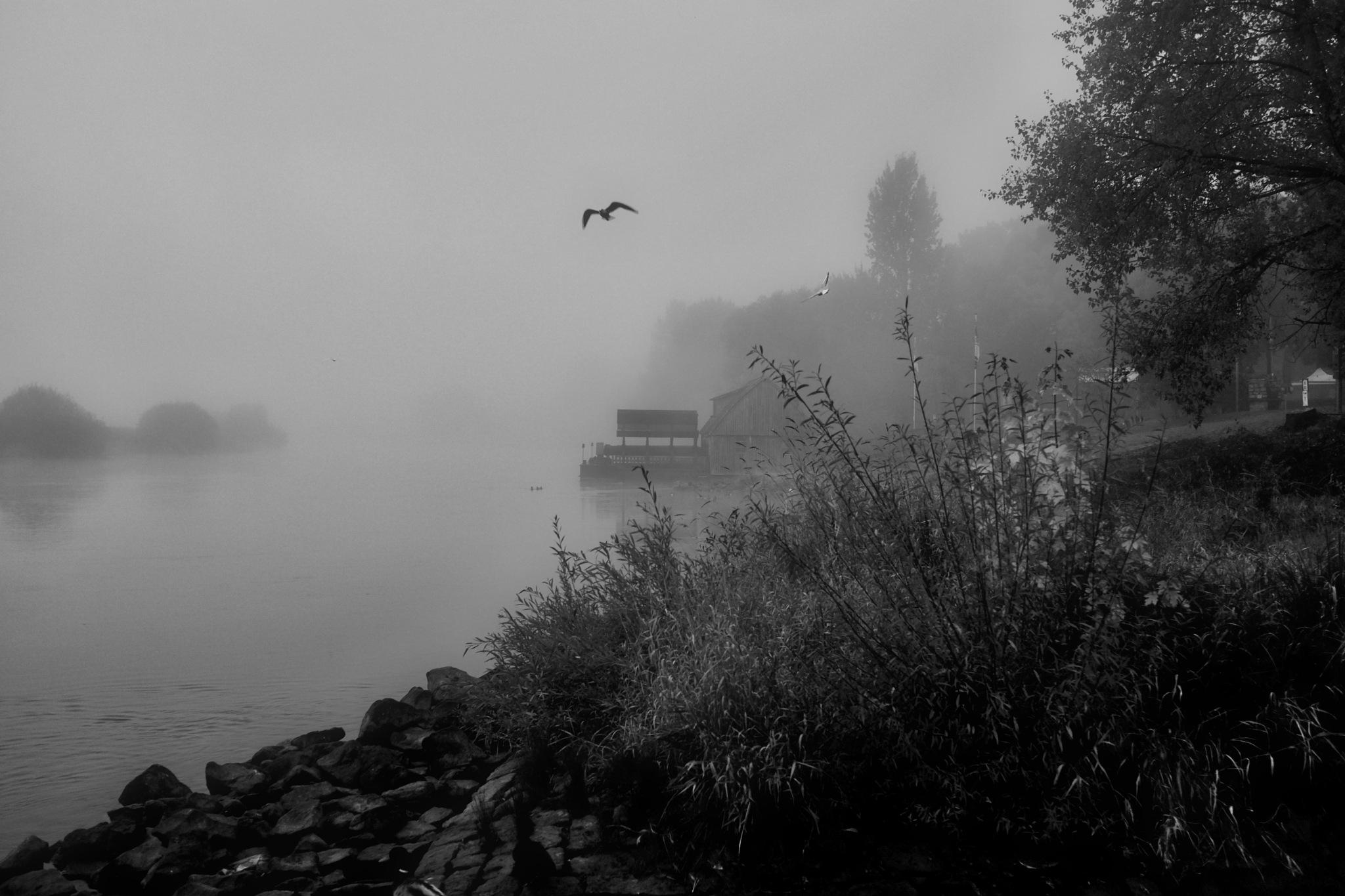 Nebel by peterkryzun