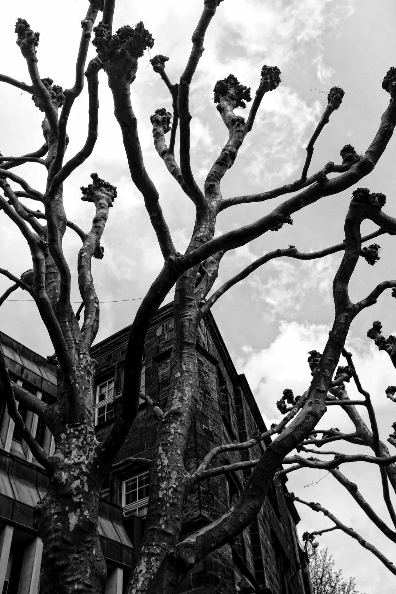 Der Baum am Dom by peterkryzun