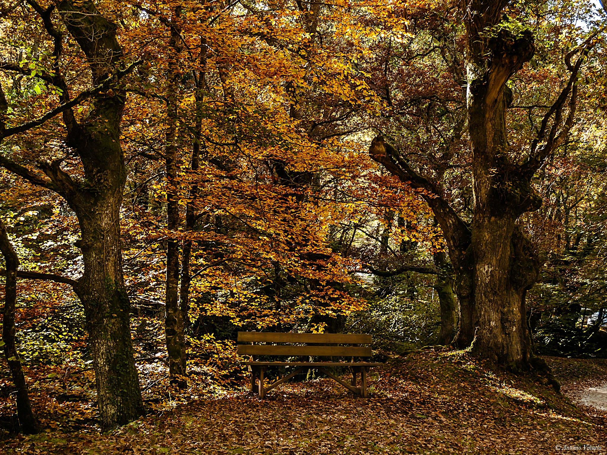 Autumnal colors by Antonio Viñuela