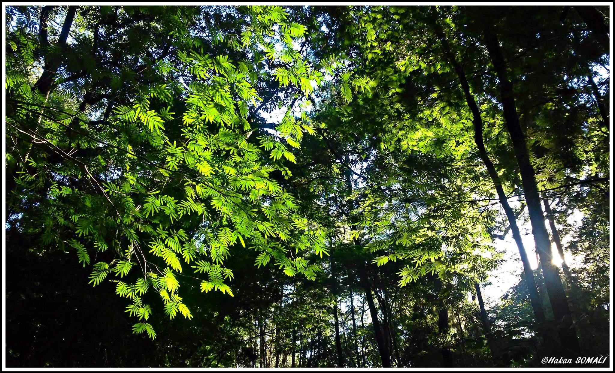 Light rays reaching through the trees - Marília / São Paulo by Hakan Somali