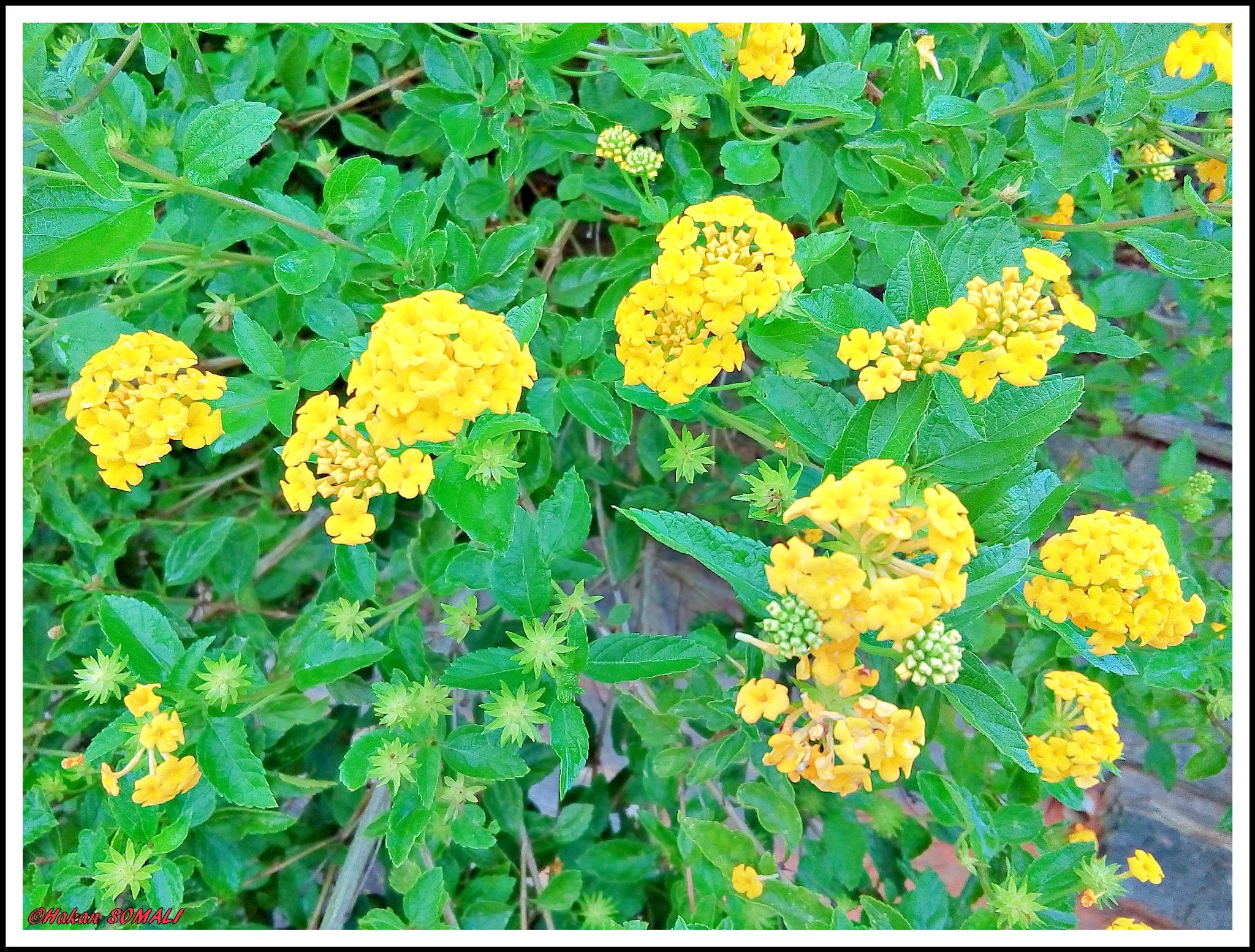 Flores em Araraquara / SP by Hakan Somali