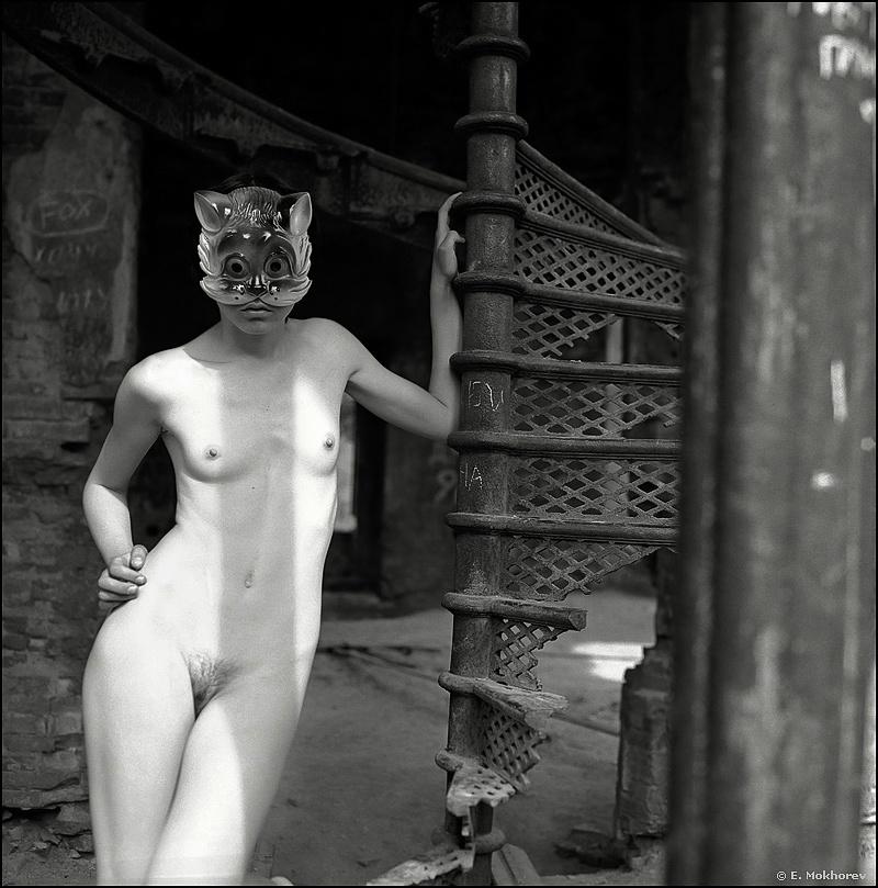 Cat by Evgeny Mokhorev