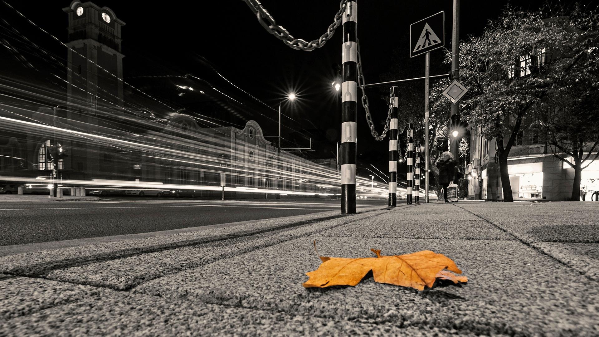 Leaf by Yoan Mitov