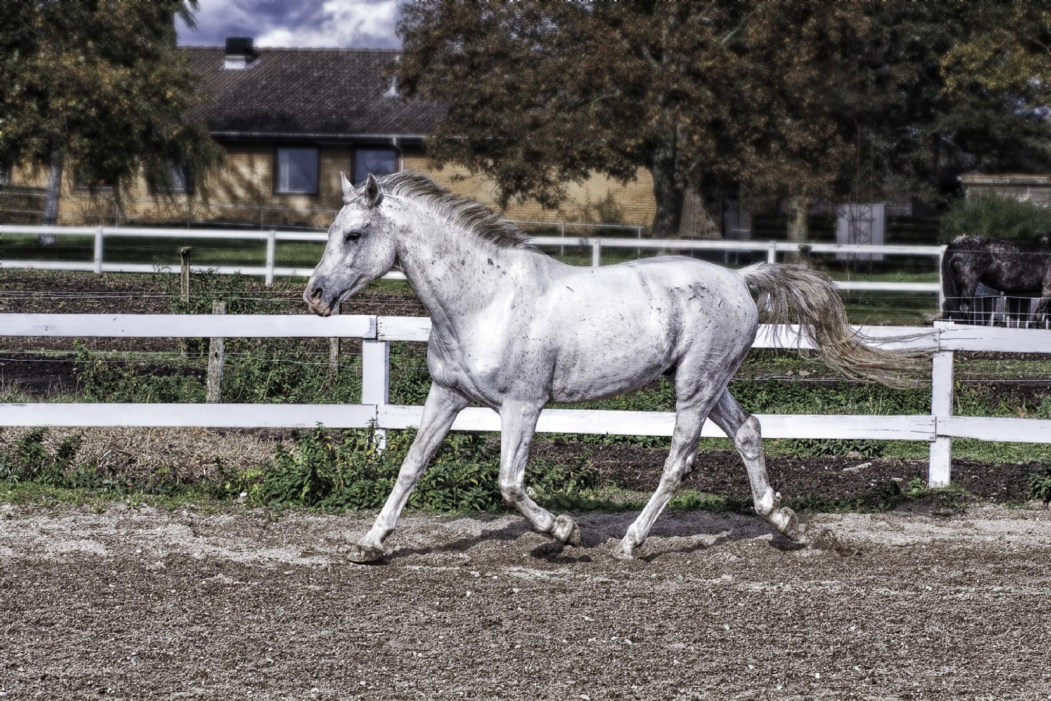 a horse by weaksyntax