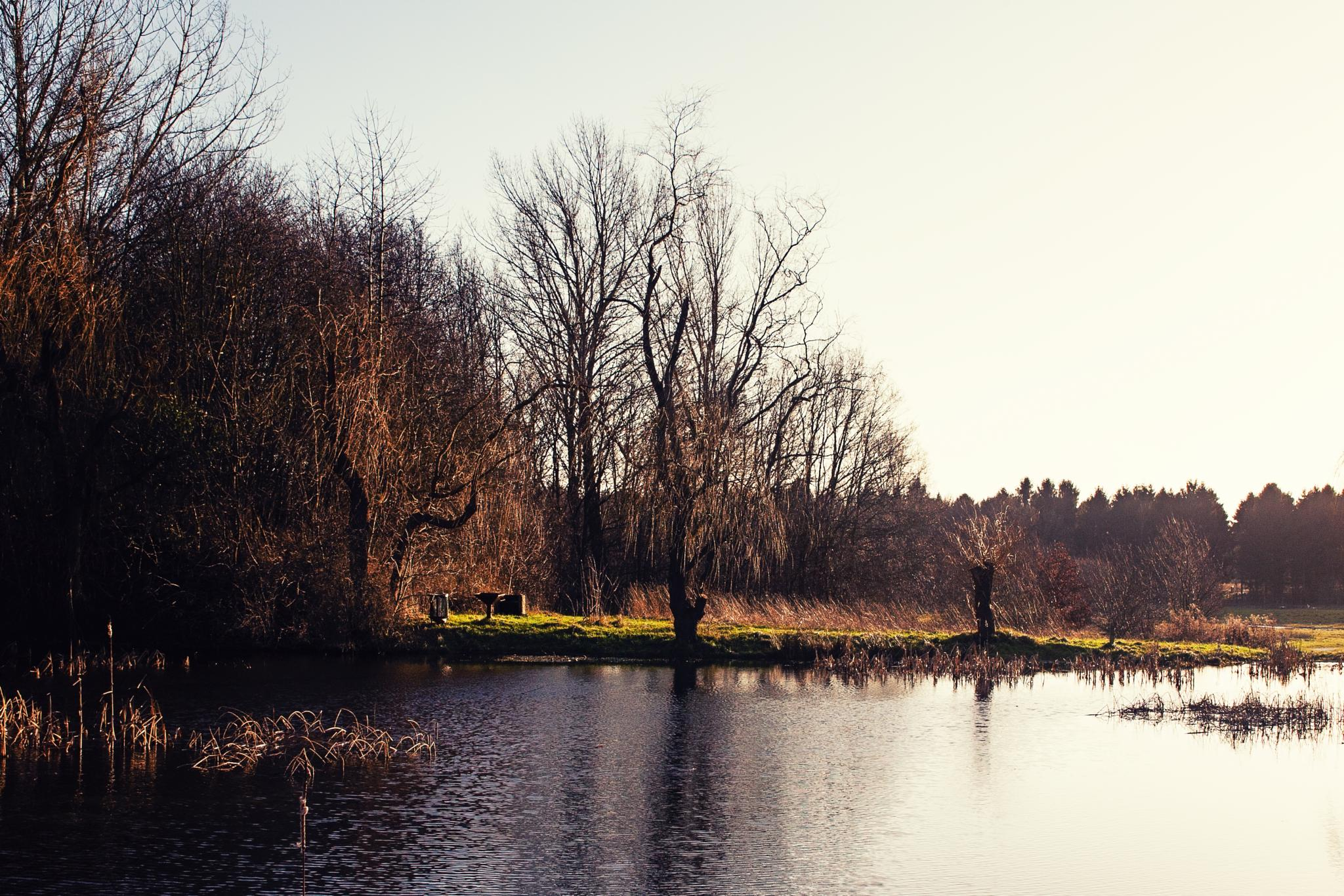 by the lake by weaksyntax