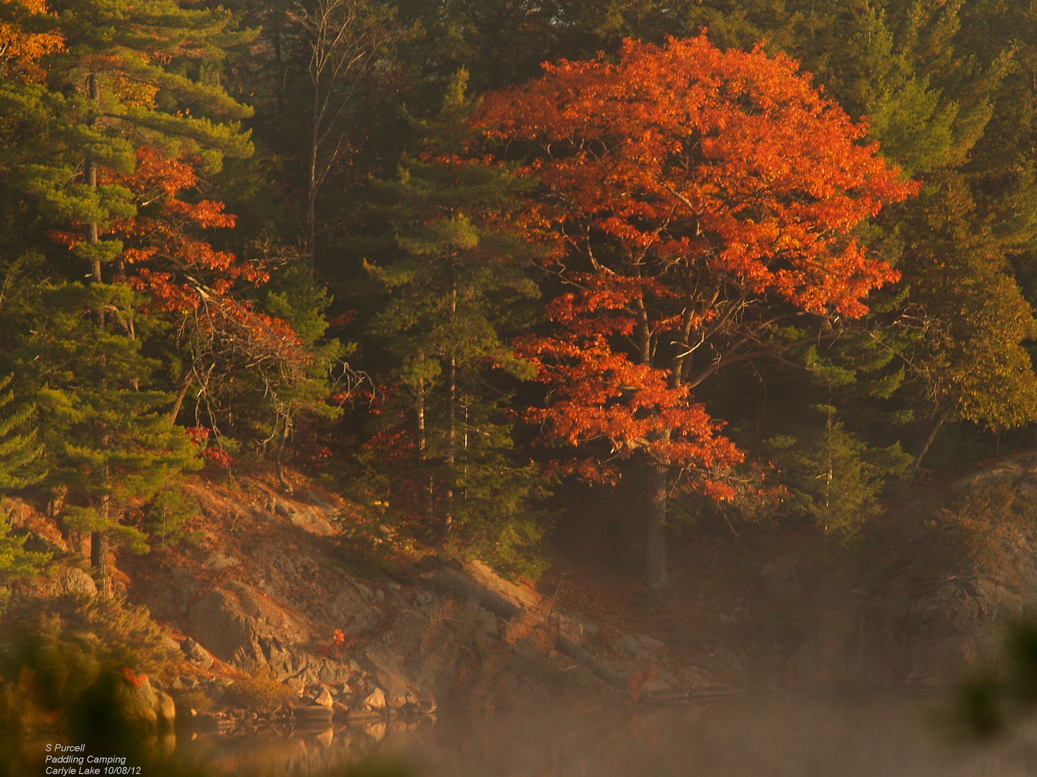 Fall's mists by Sean Purcell