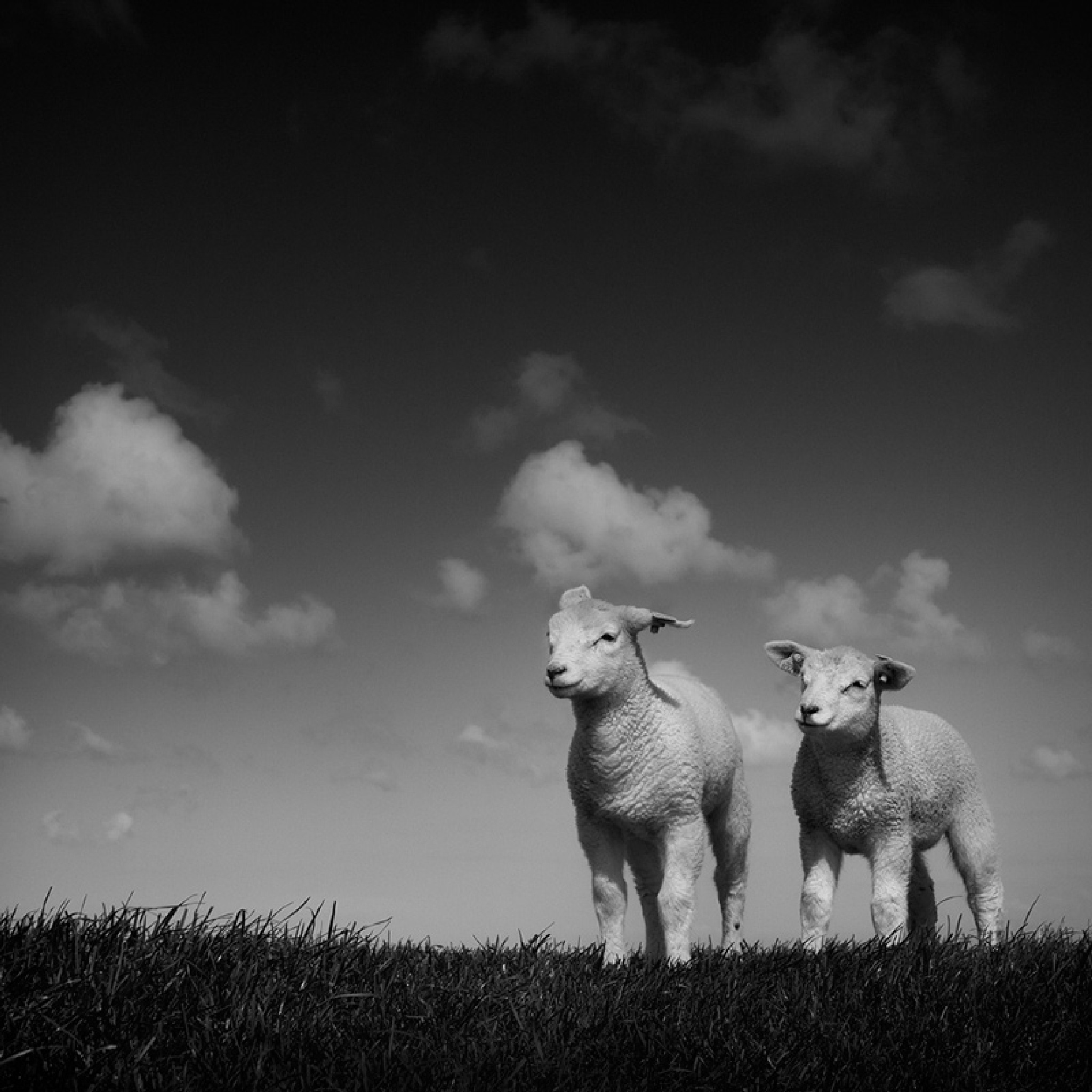 TWIN by RuudPeters