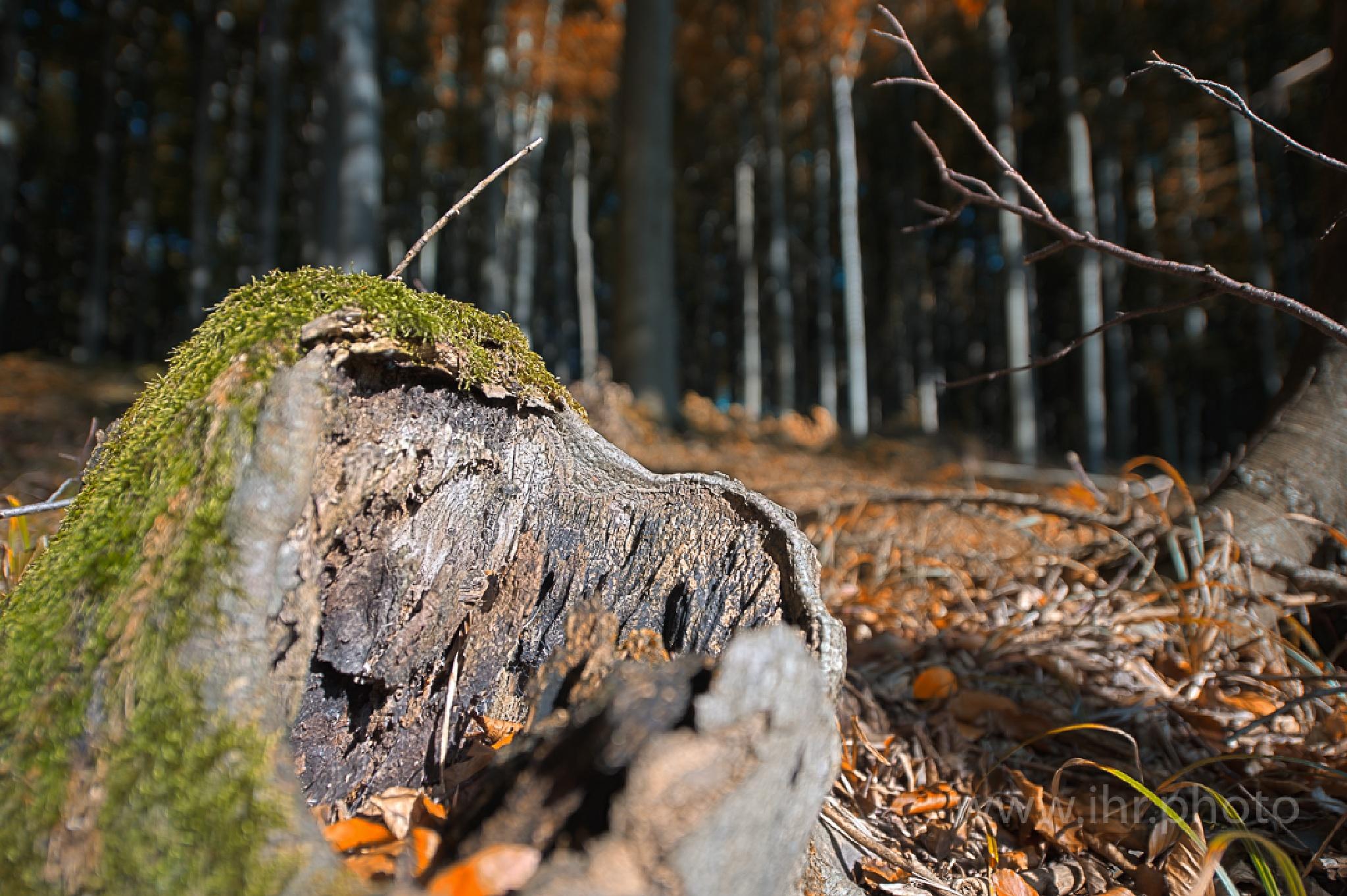 Herbst III / Autumn III by Peter Buchacher