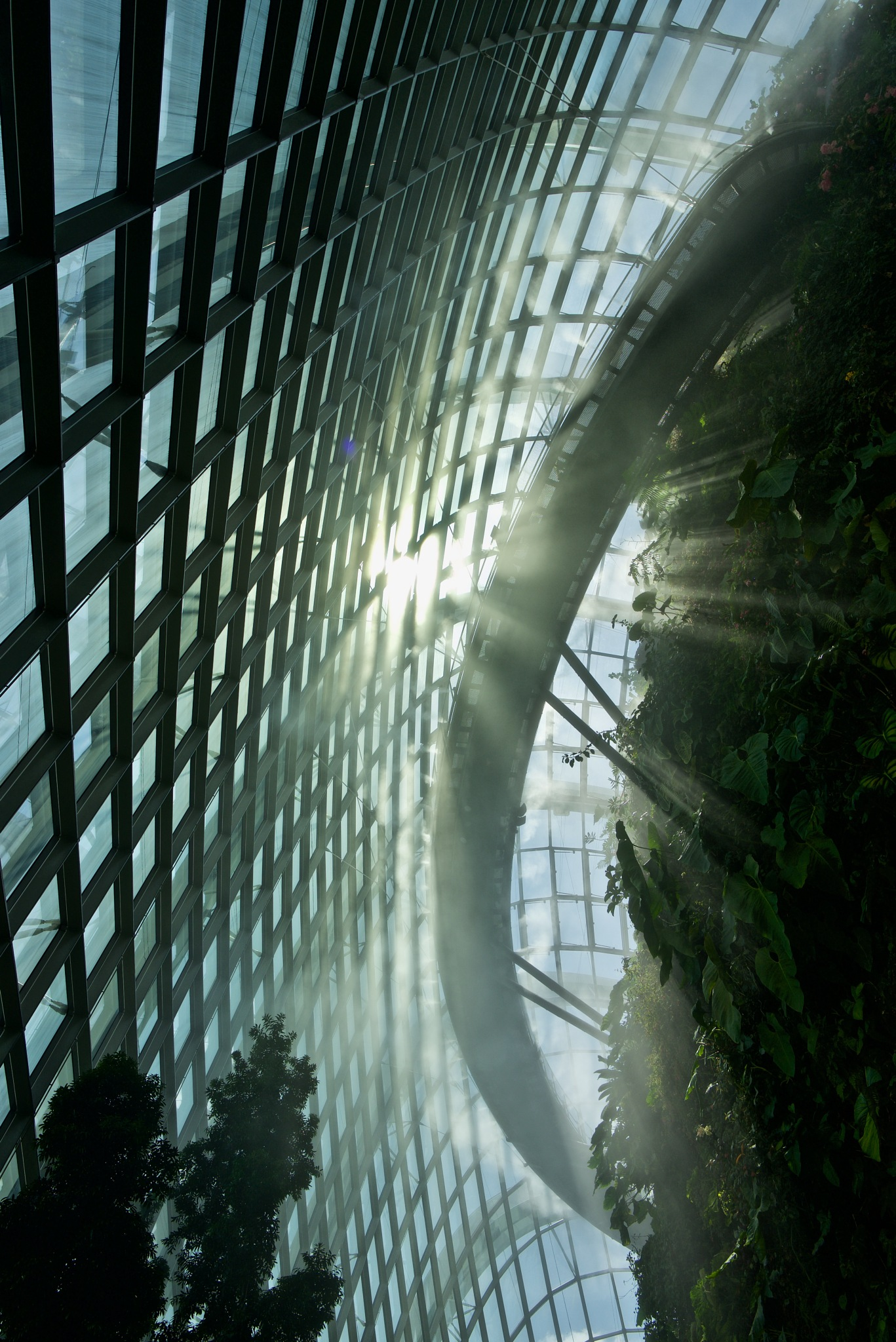 Cloud forest by Mike Freel