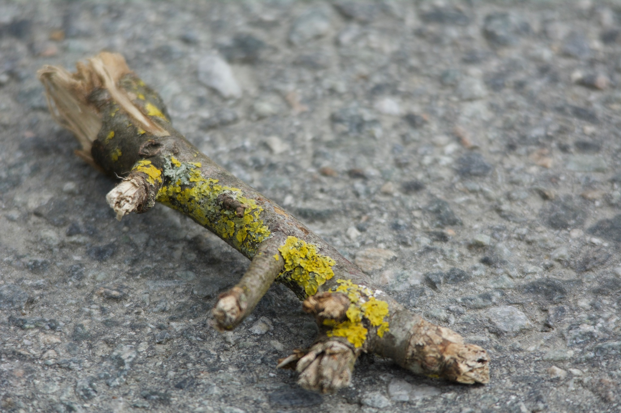 Twig 1.002 by Lars-Toralf Utnes Storstrand