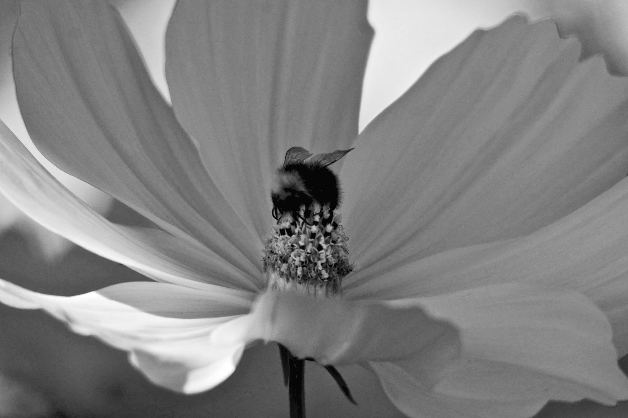 BW Flowers 1.003 by Lars-Toralf Utnes Storstrand