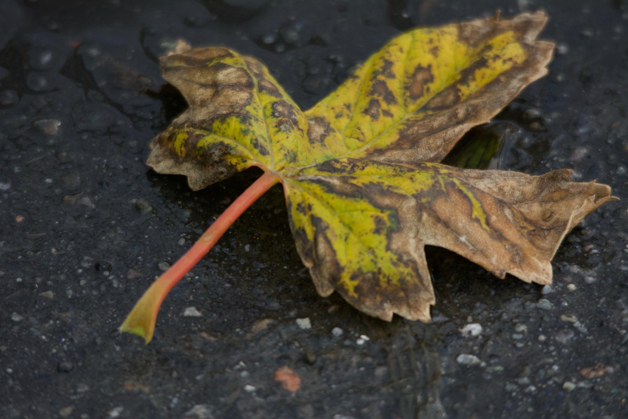 Autumnal 1.028 by Lars-Toralf Utnes Storstrand