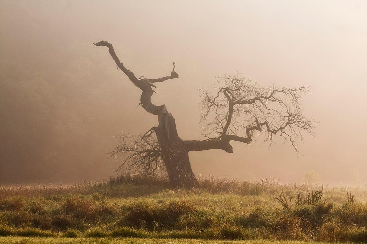 oak by Anna Klinkosz