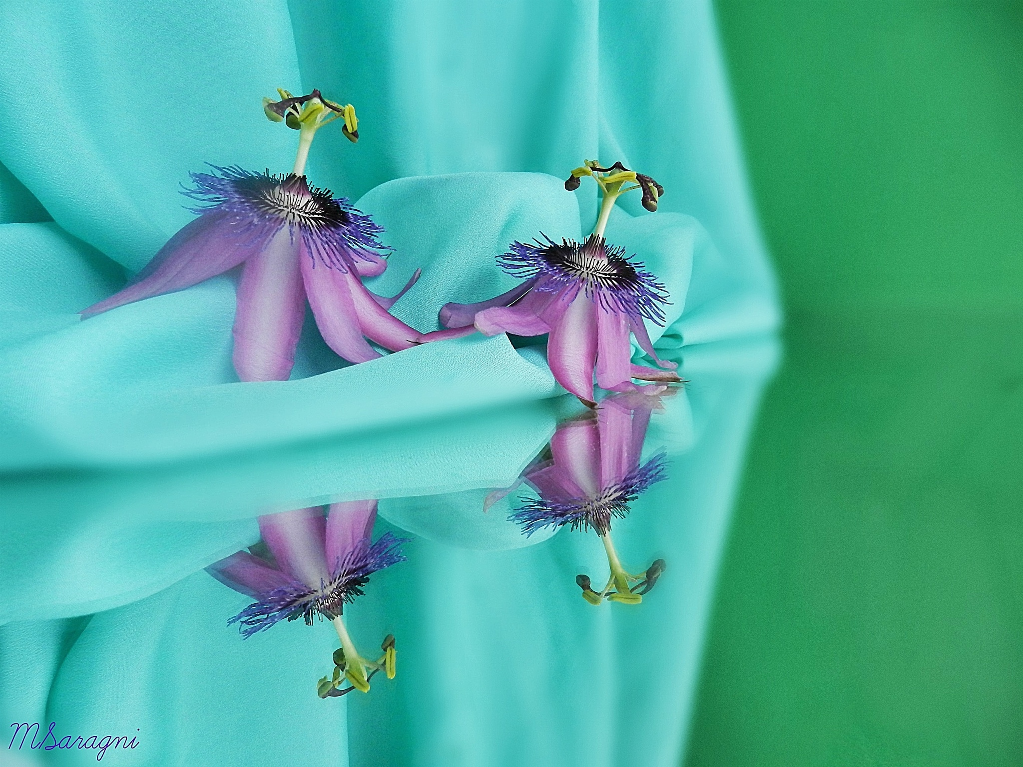 Passiflora by Marisa Saragni