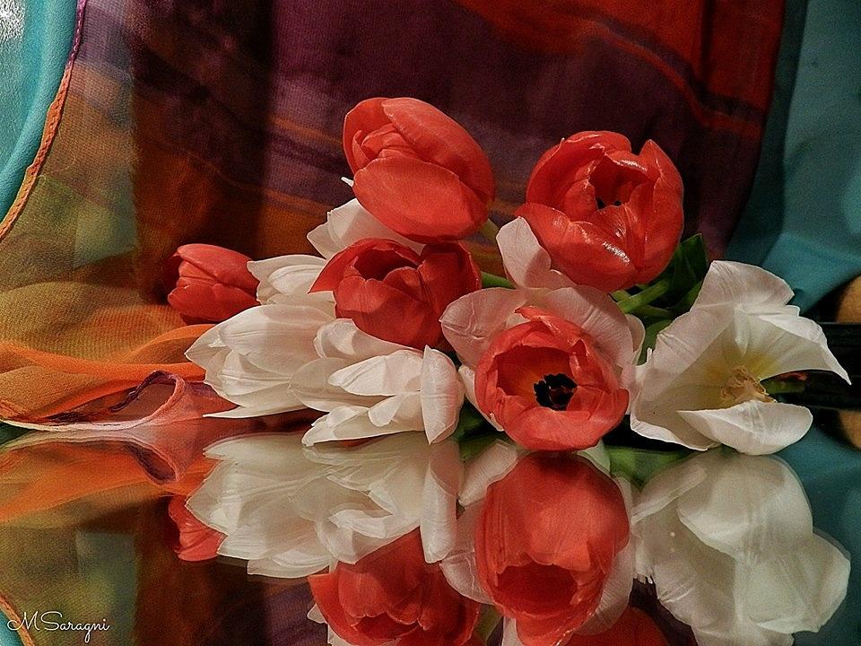 Tulipani bianchi e rossi by Marisa Saragni