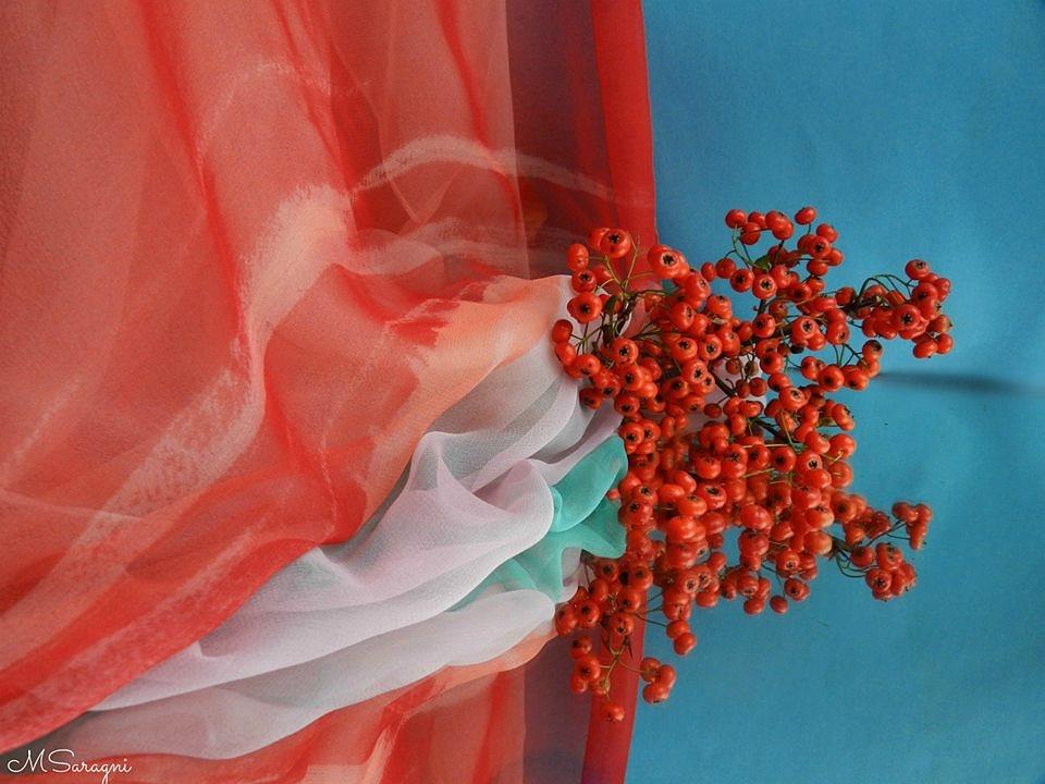 Bacche d'autunno by Marisa Saragni