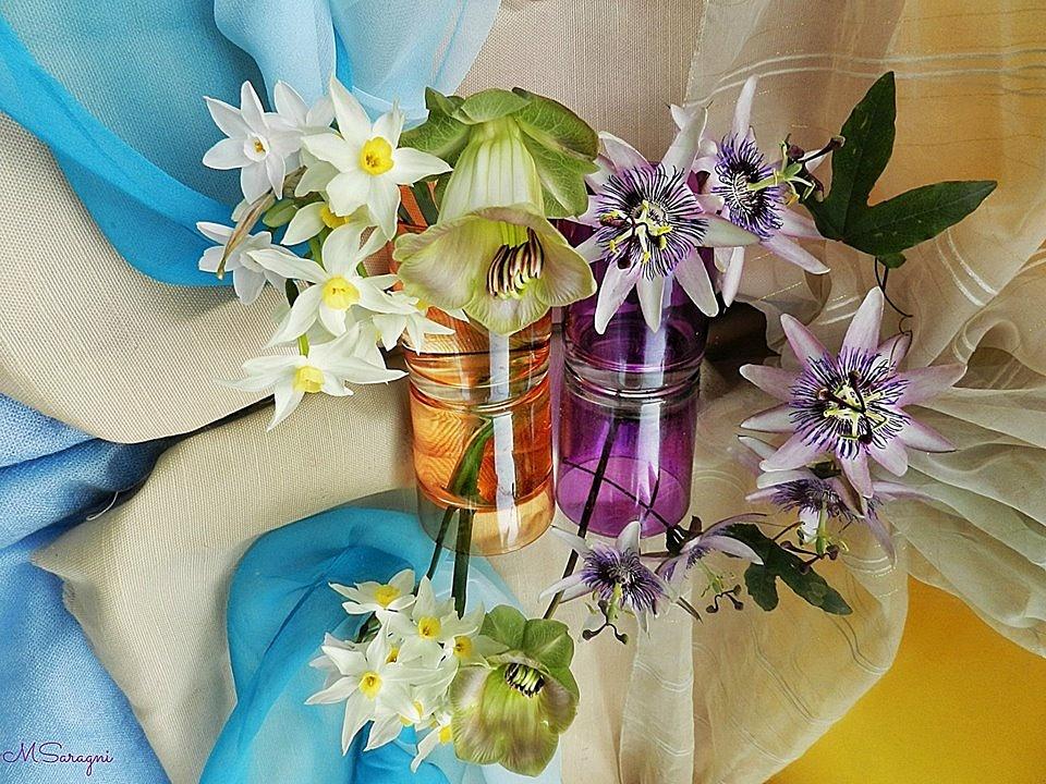 Narcisi, passiflora, cobaea scandens by Marisa Saragni
