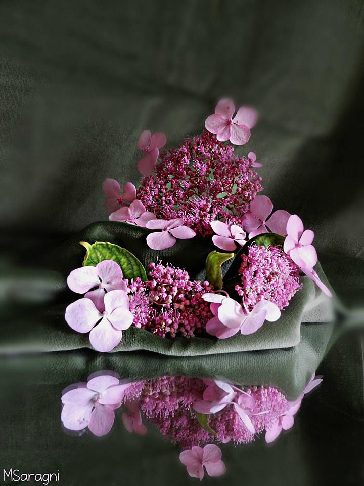 Hydrangea by Marisa Saragni