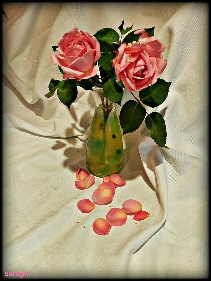 Rose by Marisa Saragni