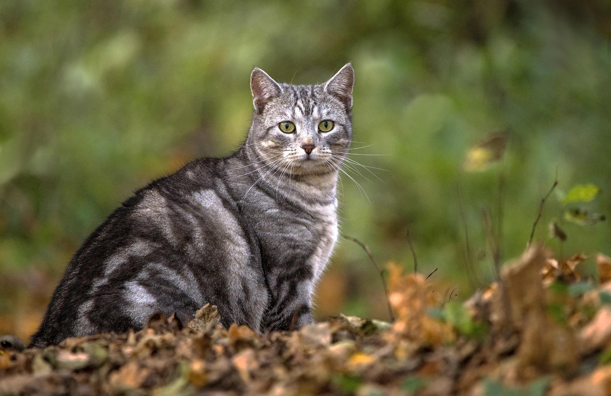 My cat Leida! by NillaA