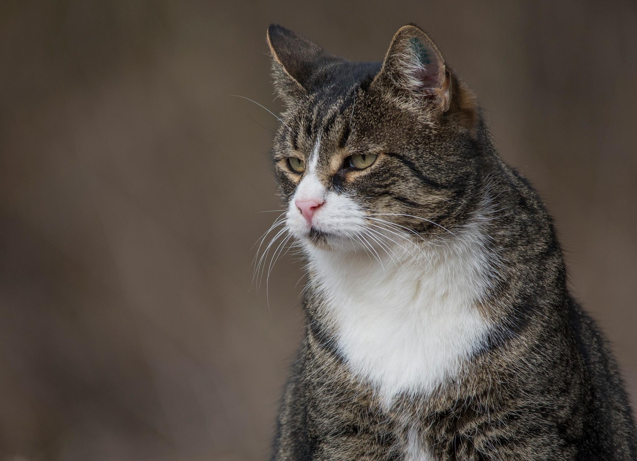 Molly. a cat with attitude! by NillaA