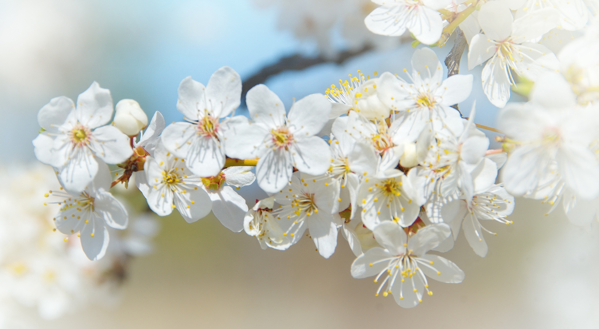 Blossom... by Oksana Kuzmyak