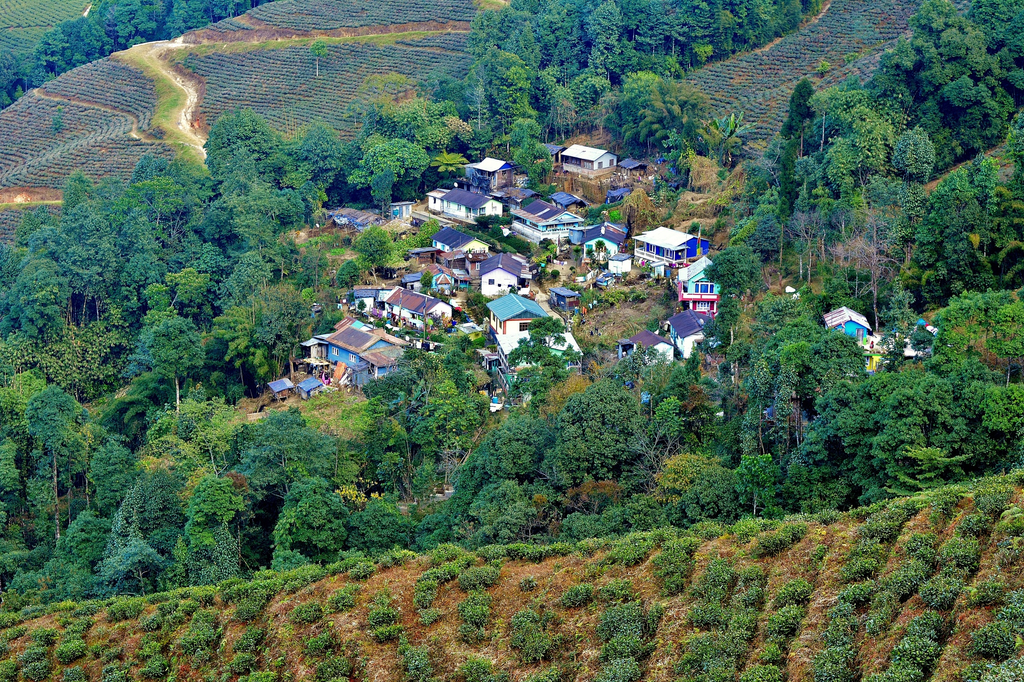 A small village surrounded by tea gardens .  by Kamal Mallick
