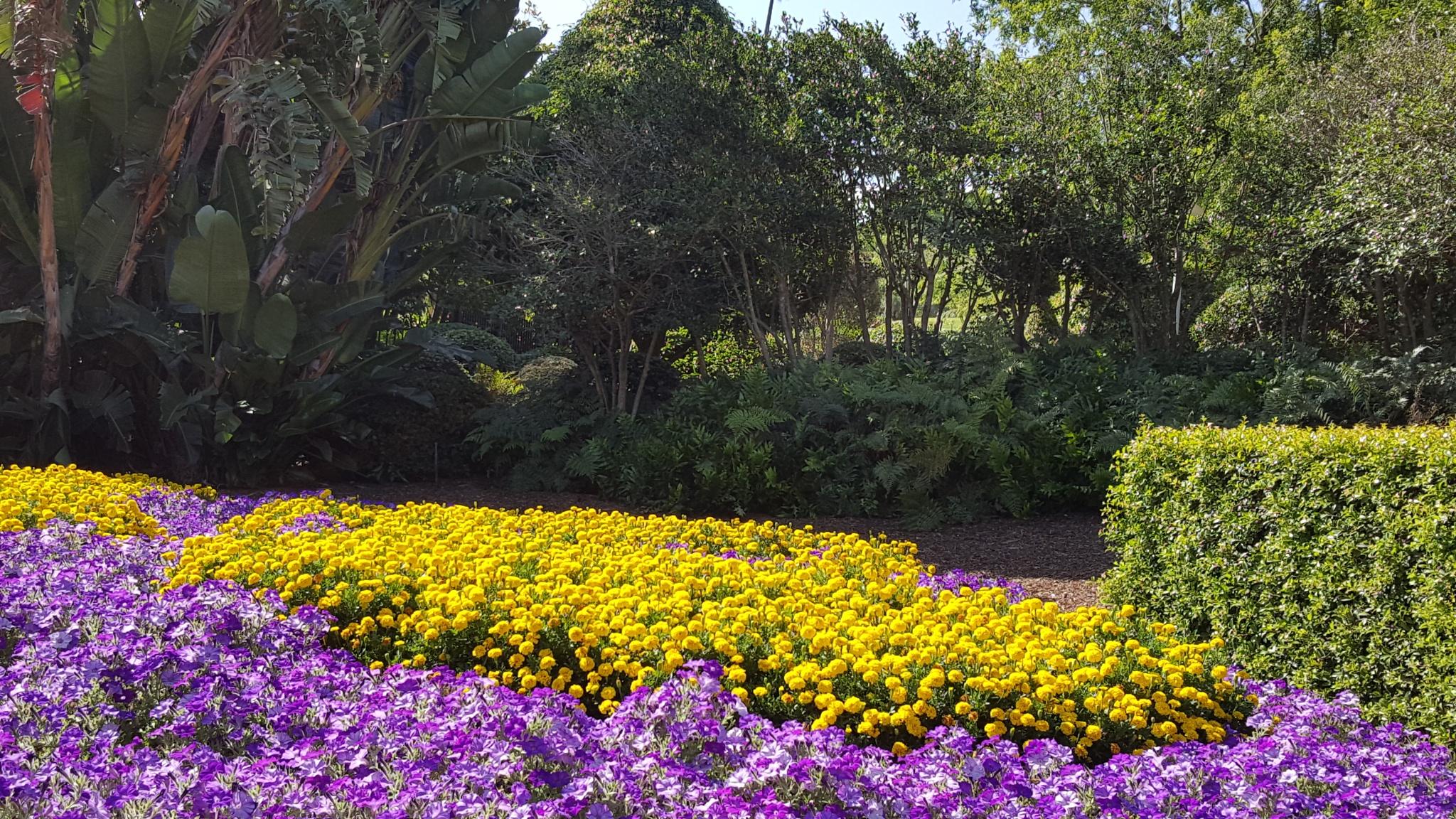 purple - yellow flowers by Swan