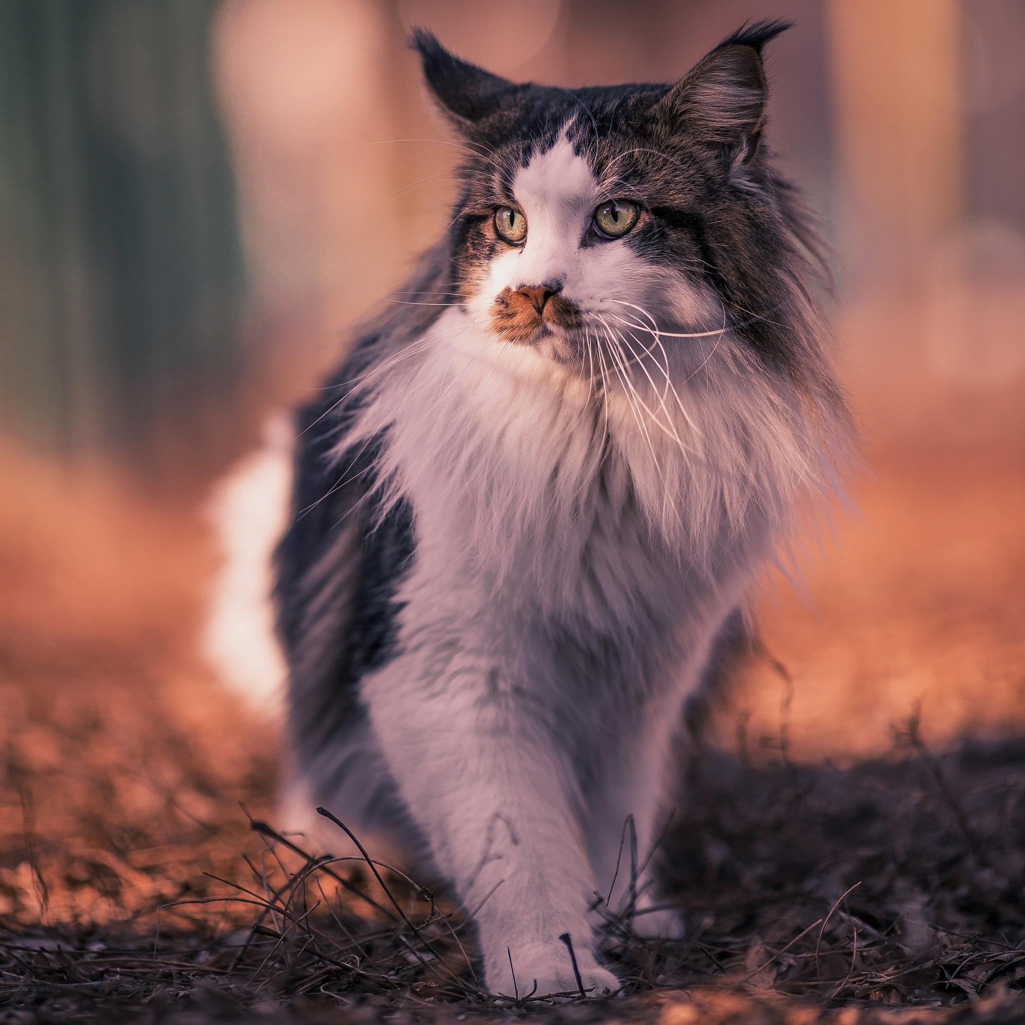 Feline Bokeh  by Moreno Pregno Photography