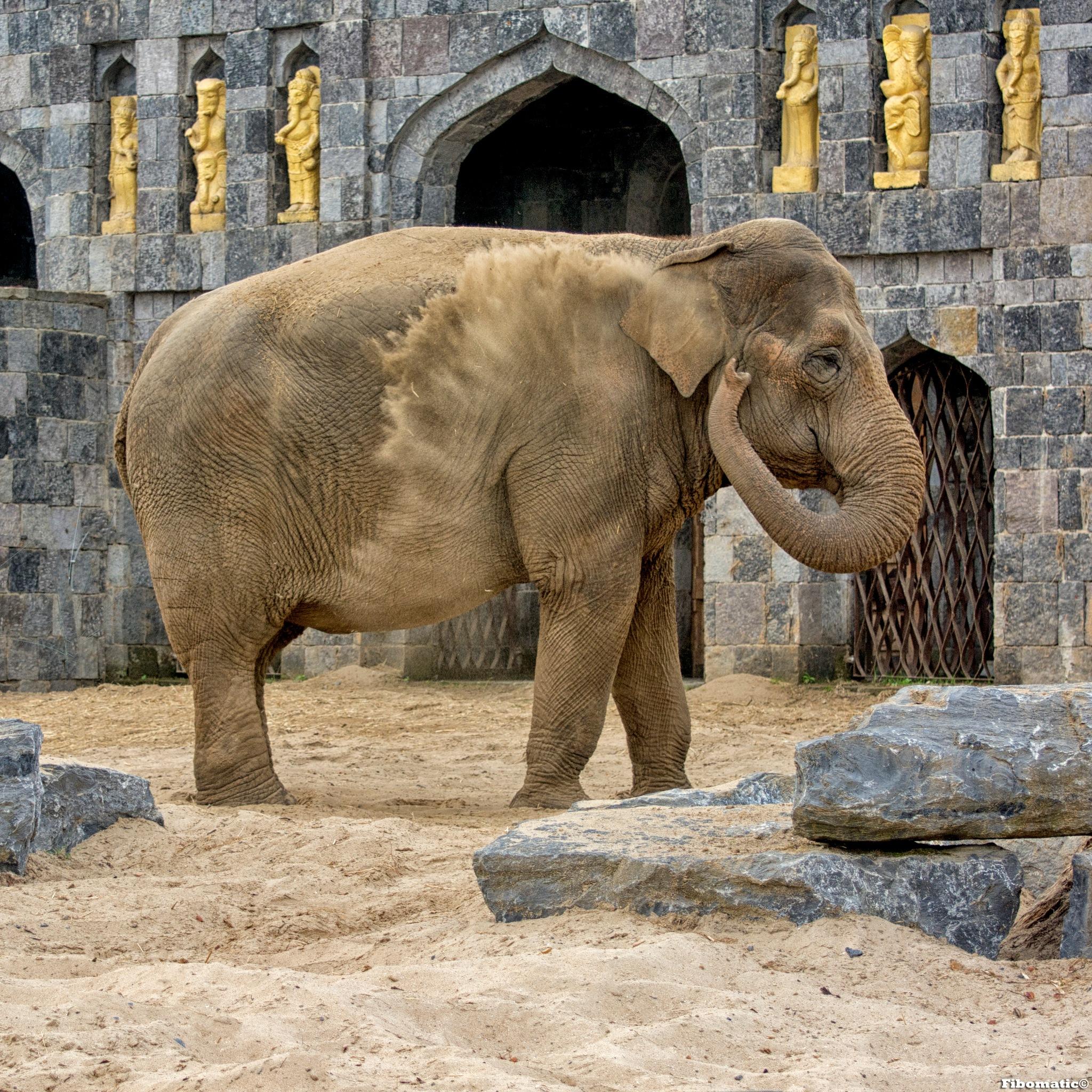 elephant india by Bob Firquet