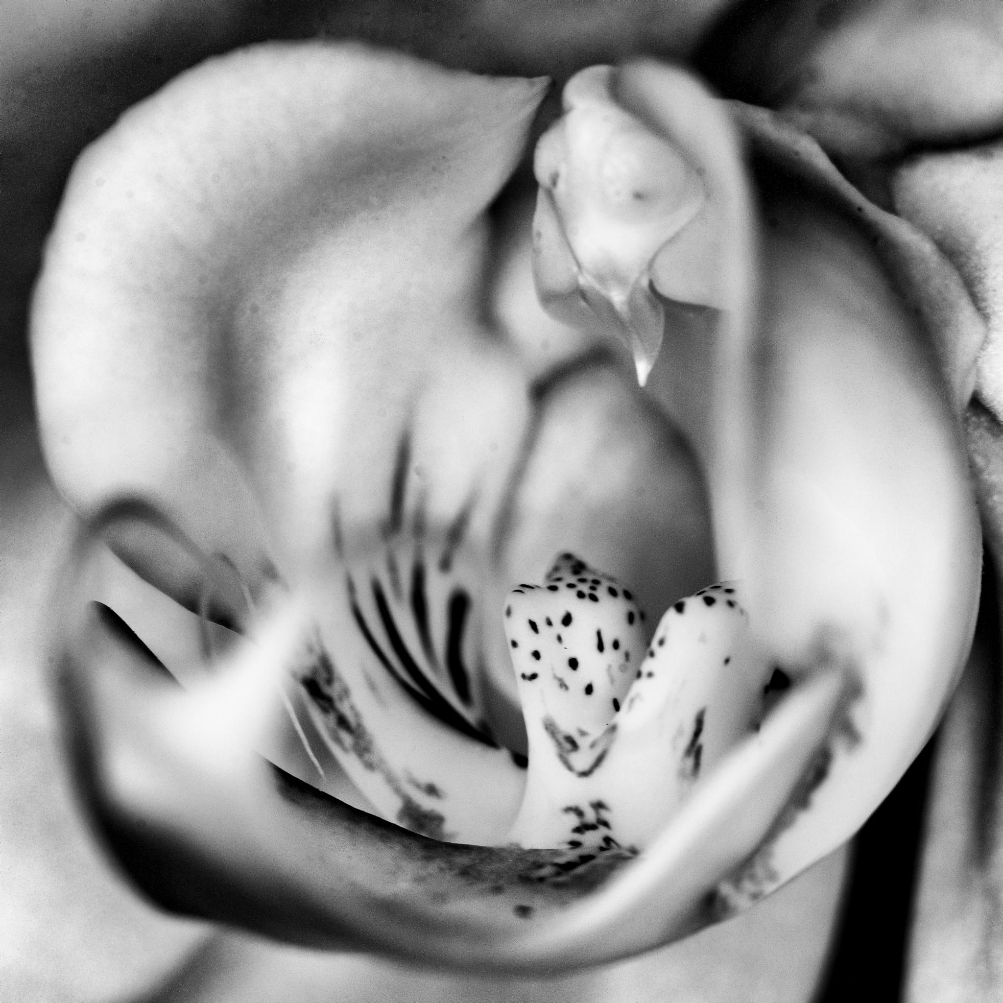 Orchidee by Jan Bosch