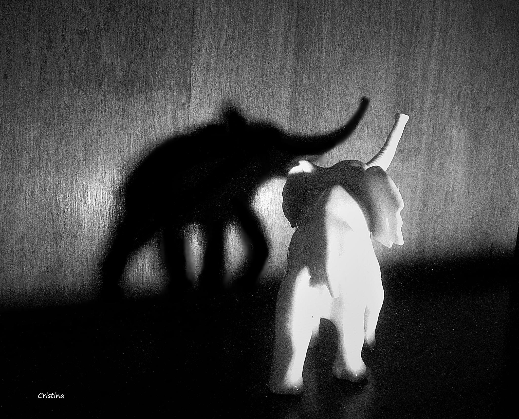 luz y sombra by Cristina Angélica