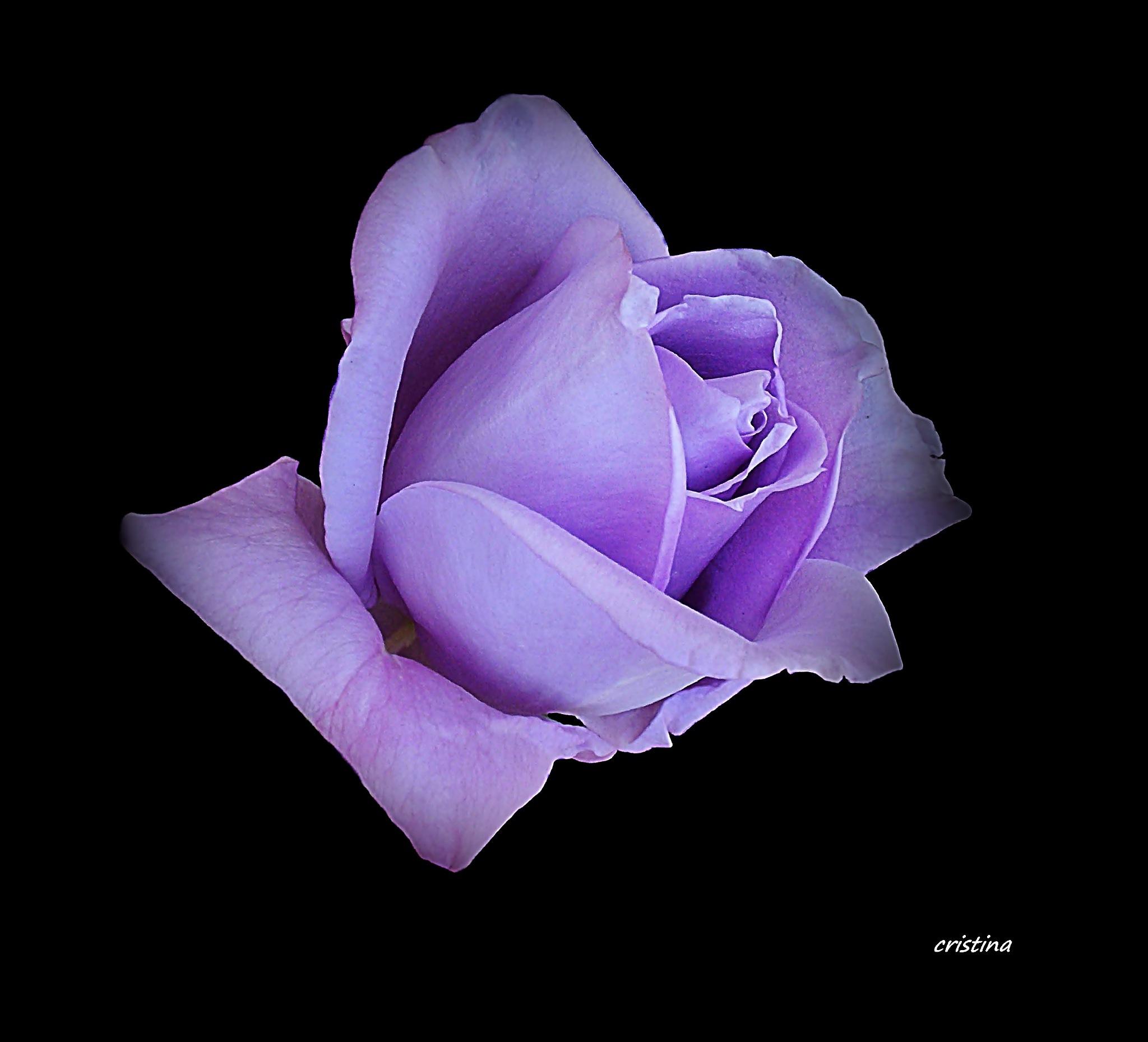 púrpura by Cristina Angélica