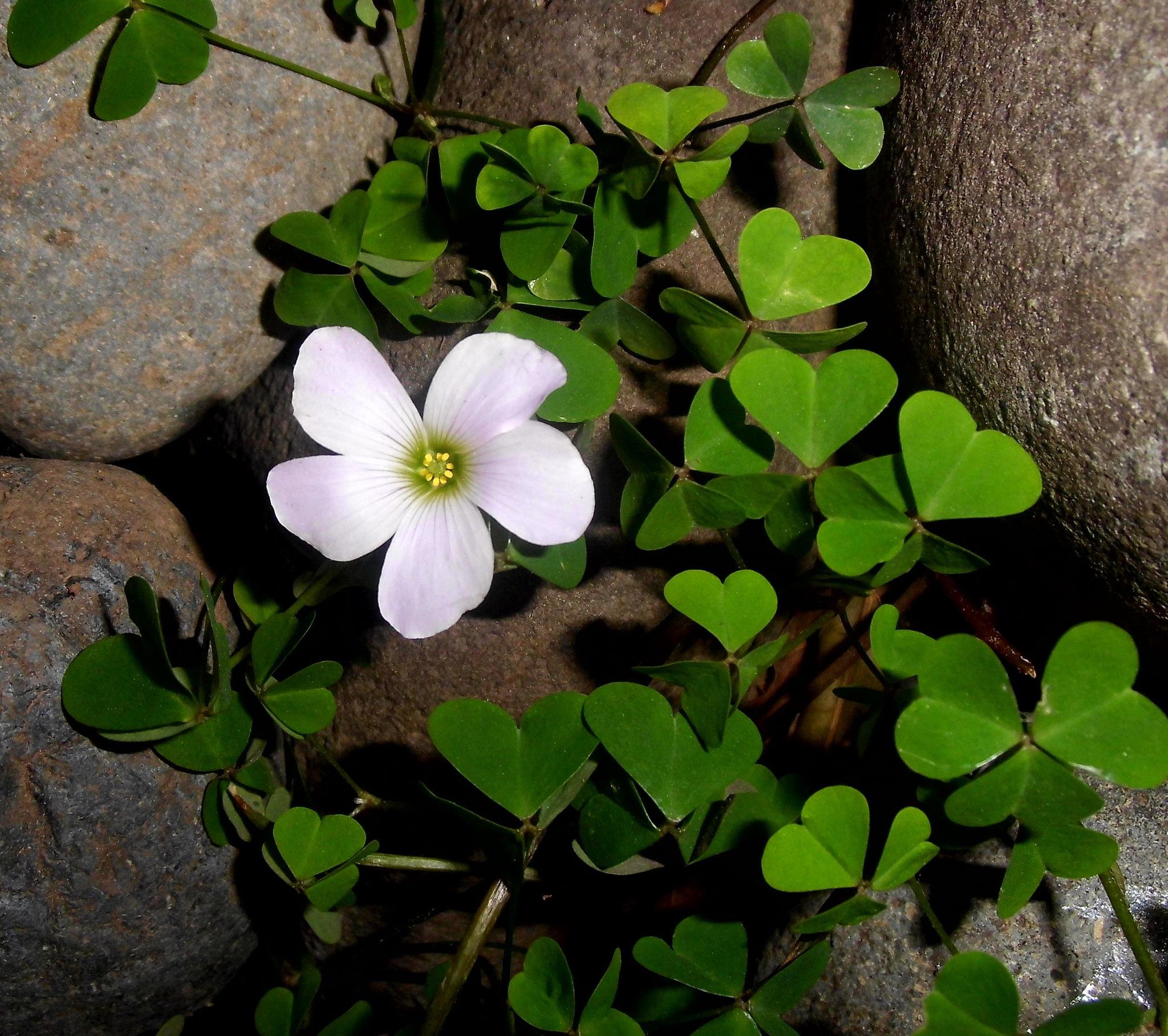 pequeña flor by Cristina Angélica