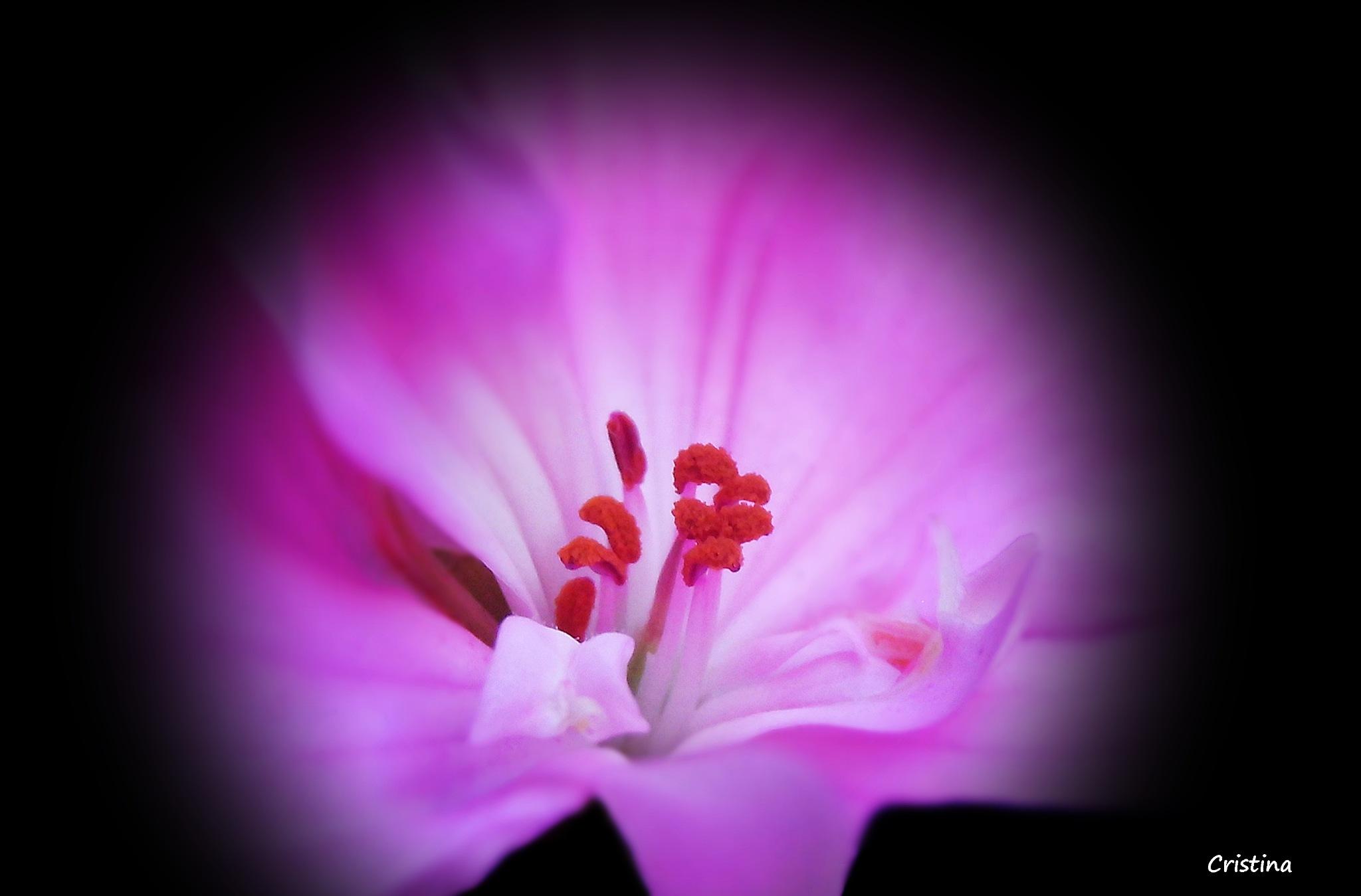 en busca del centro de la flor by Cristina Angélica