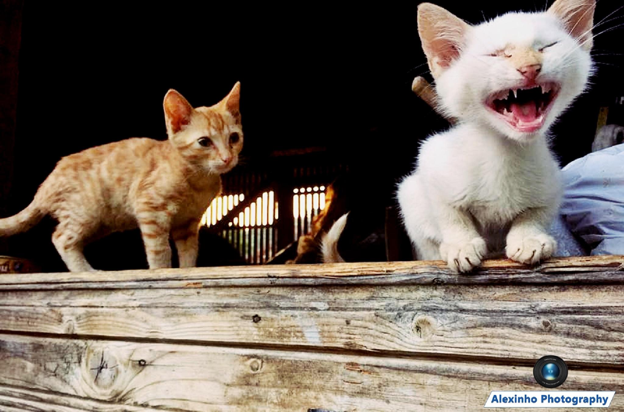 Funny Cat by Alexandru VA