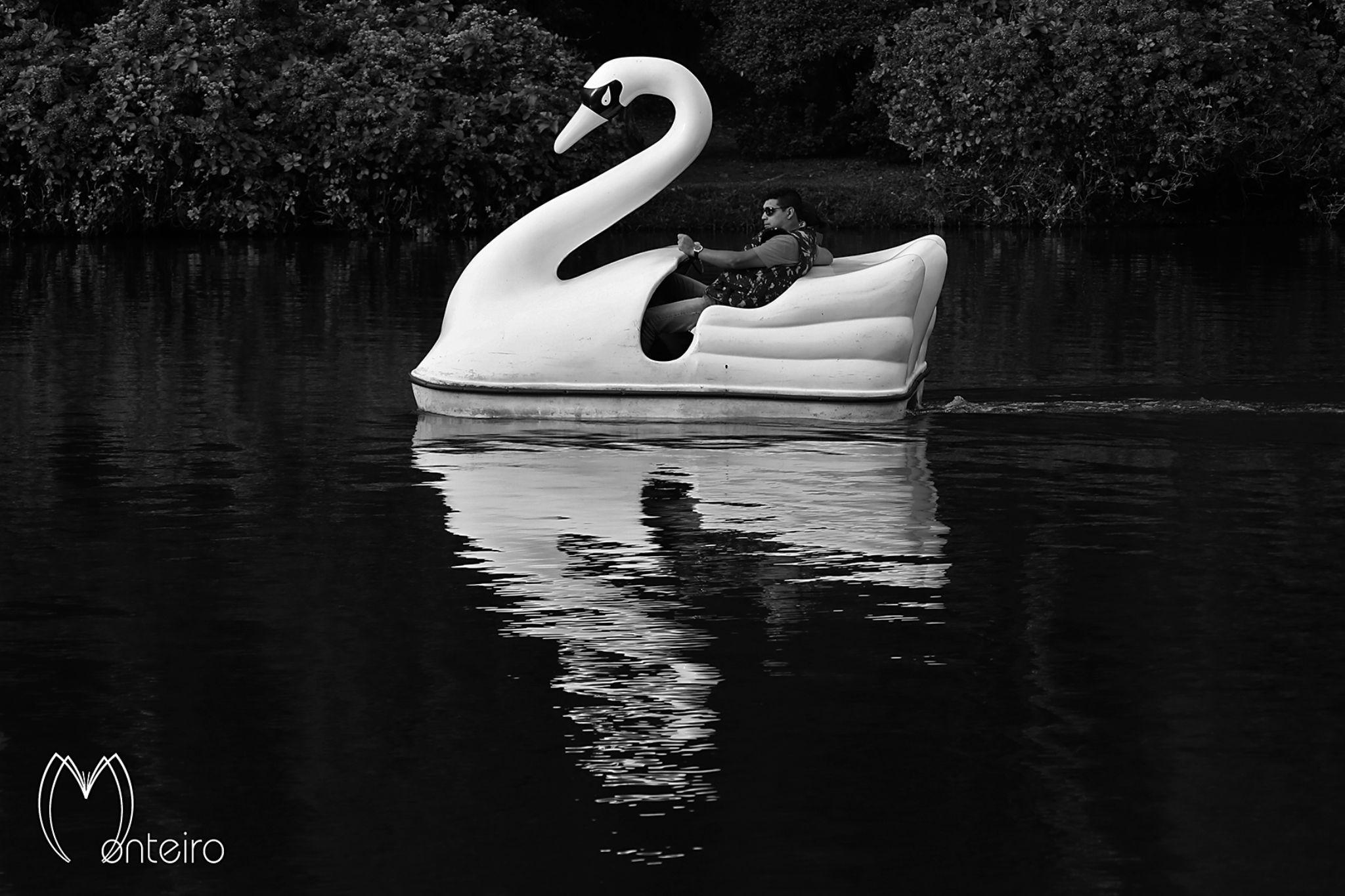 Swan by Sergio Monteiro