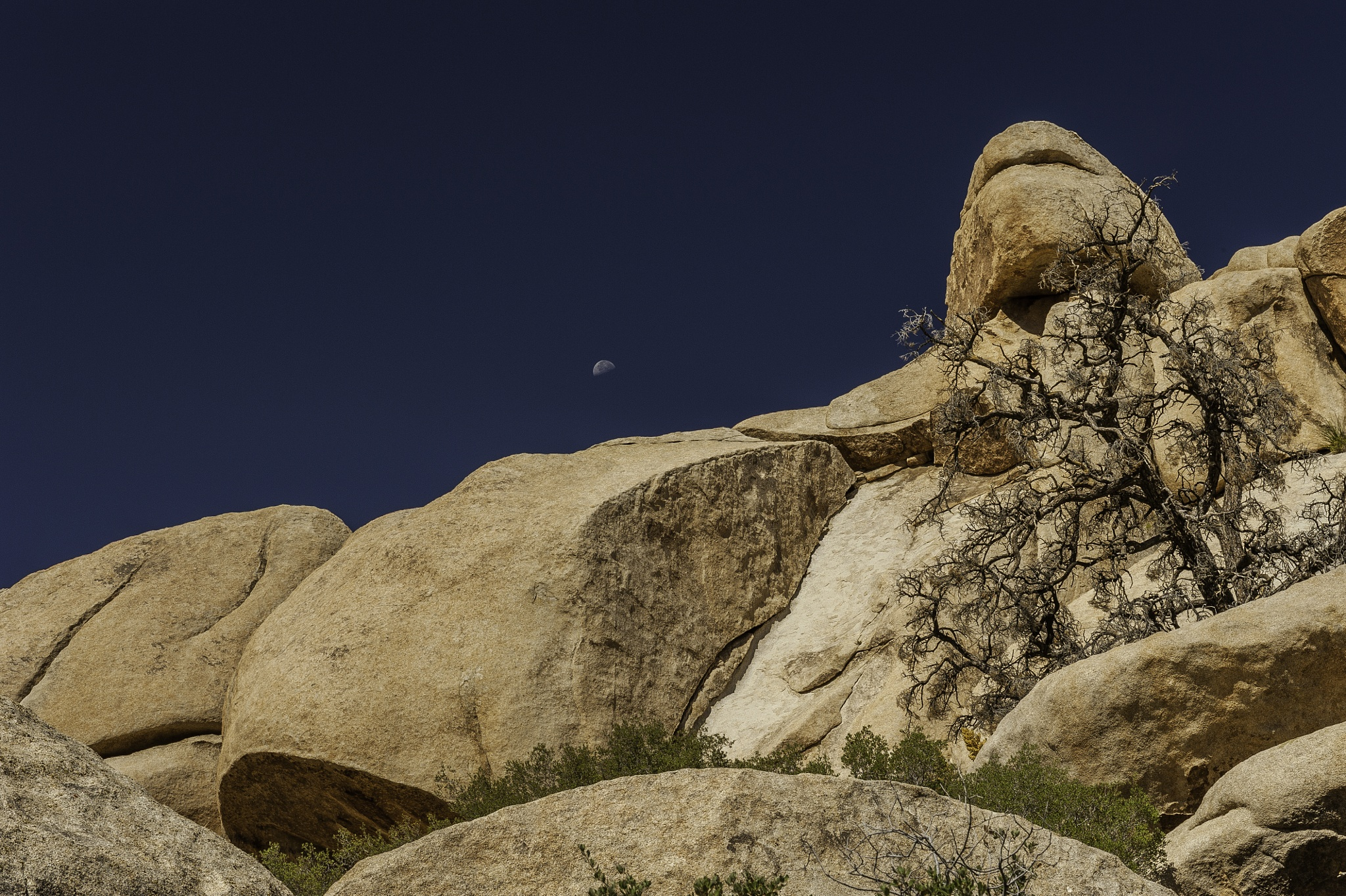 Sentinel at Joshua Tree by SCB