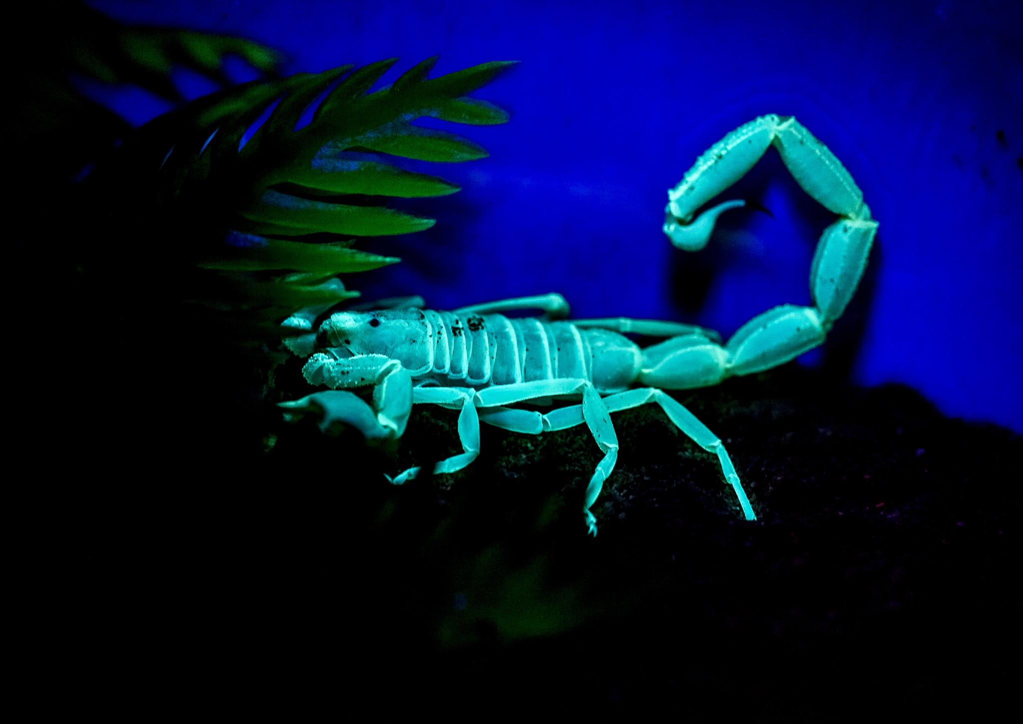 Scorpion by Mohammed Al Ali