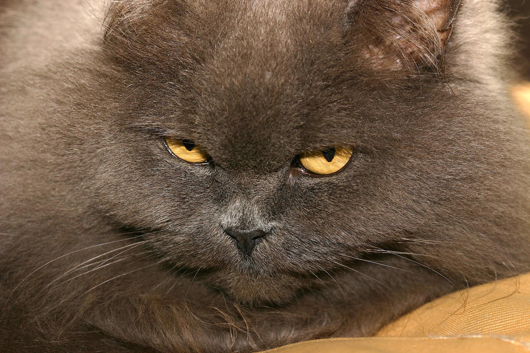 cat by Renaat