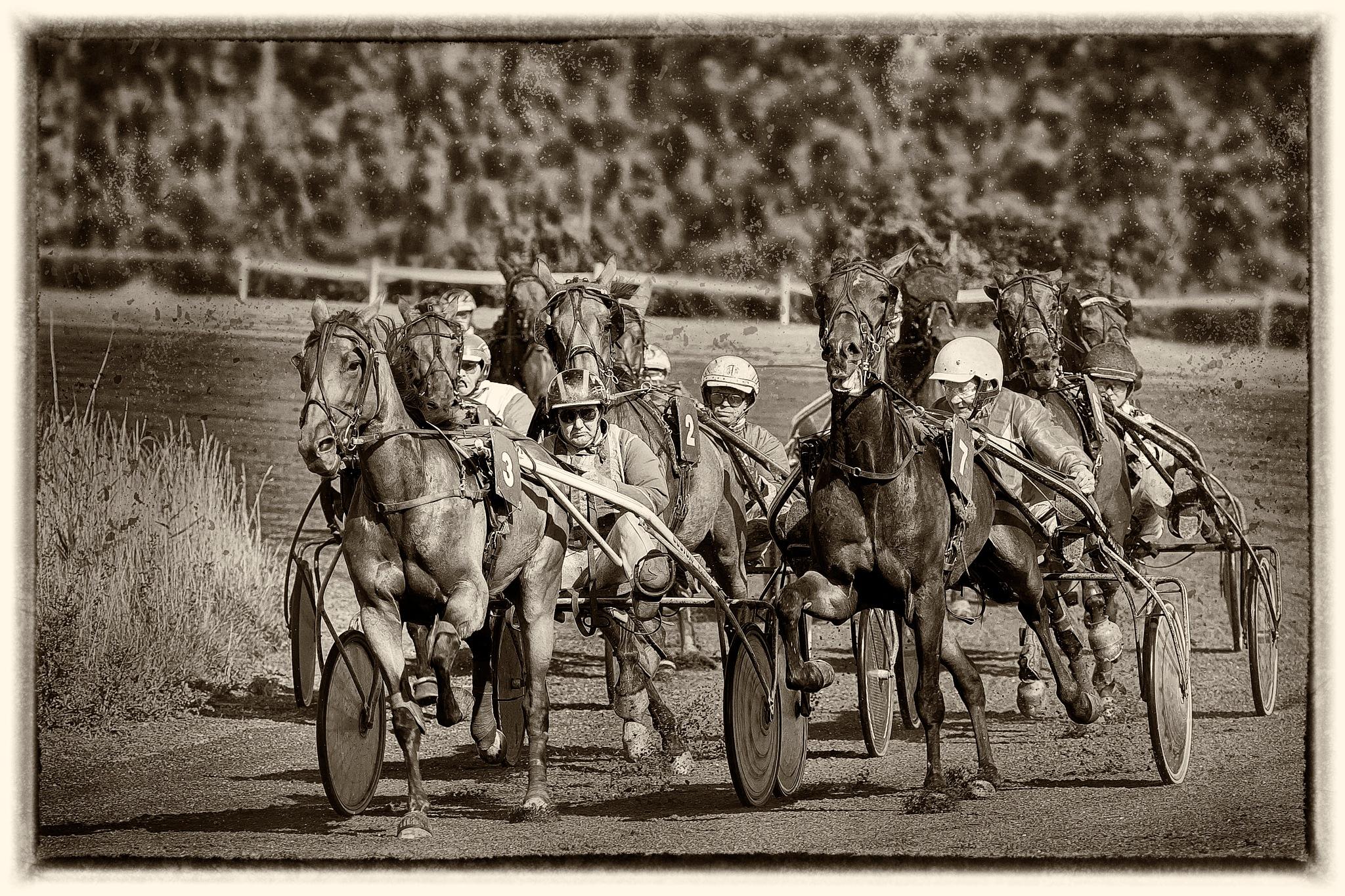 horserun by Renaat