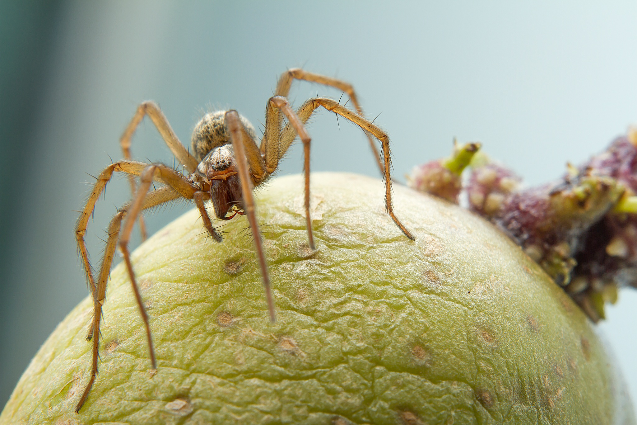 spider on potato by Renaat