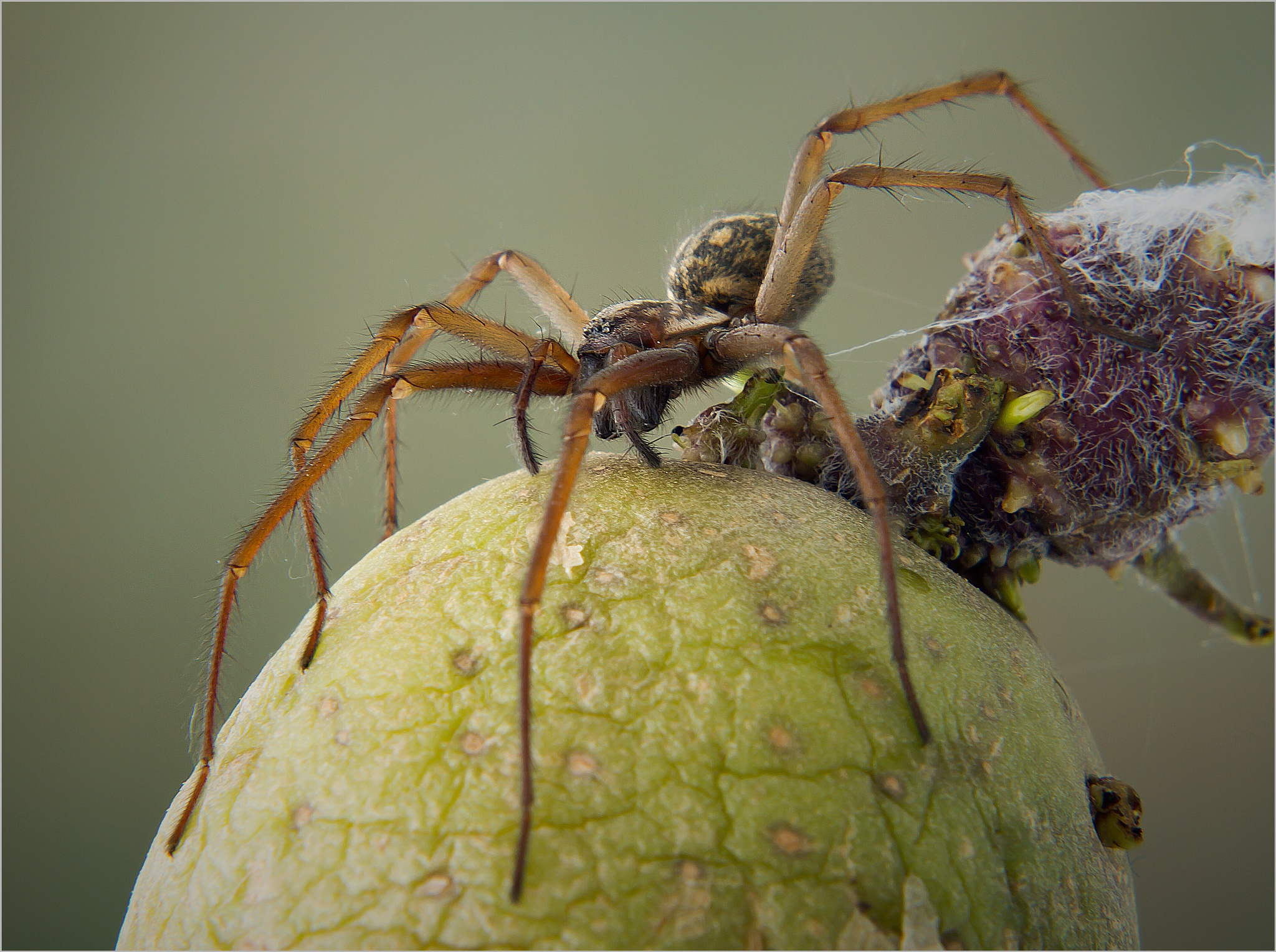 spider by Renaat