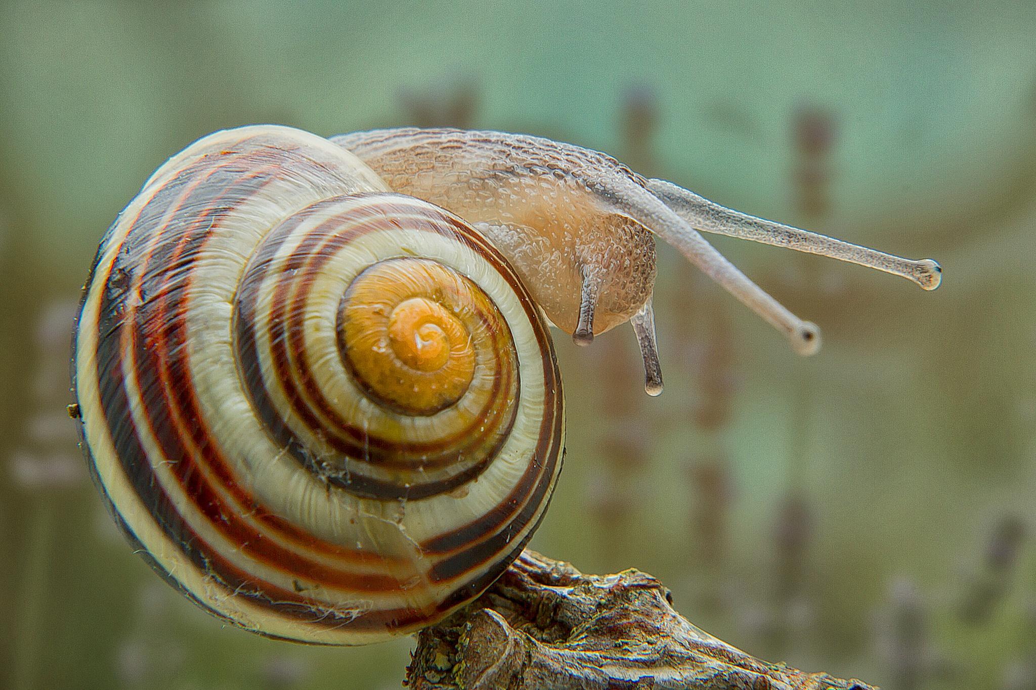 snail by Renaat