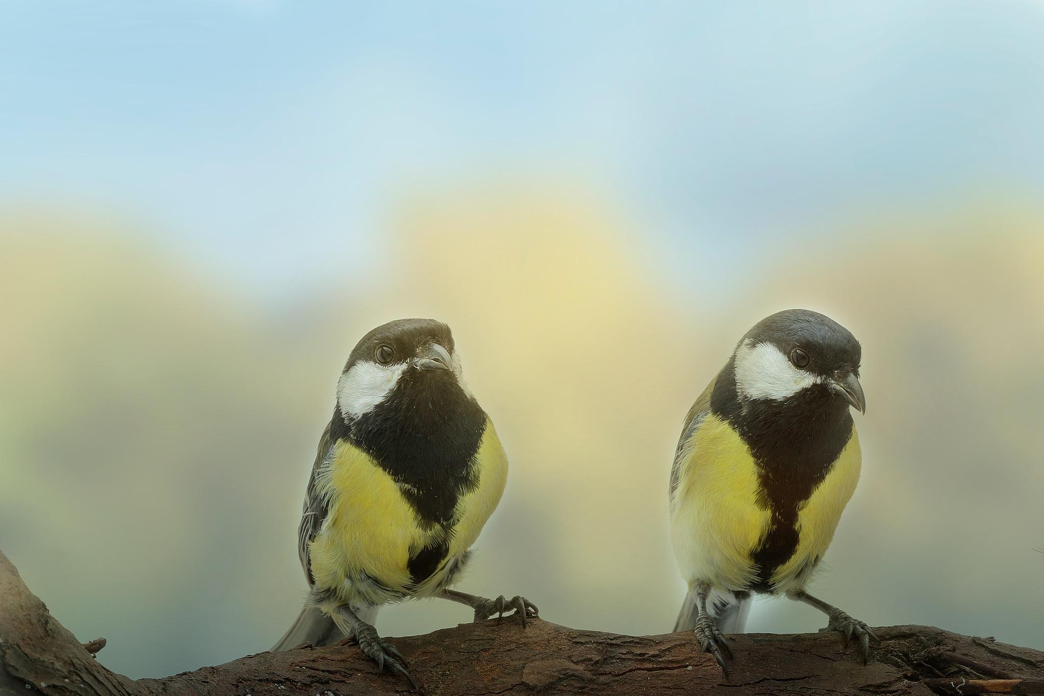 duo by Renaat