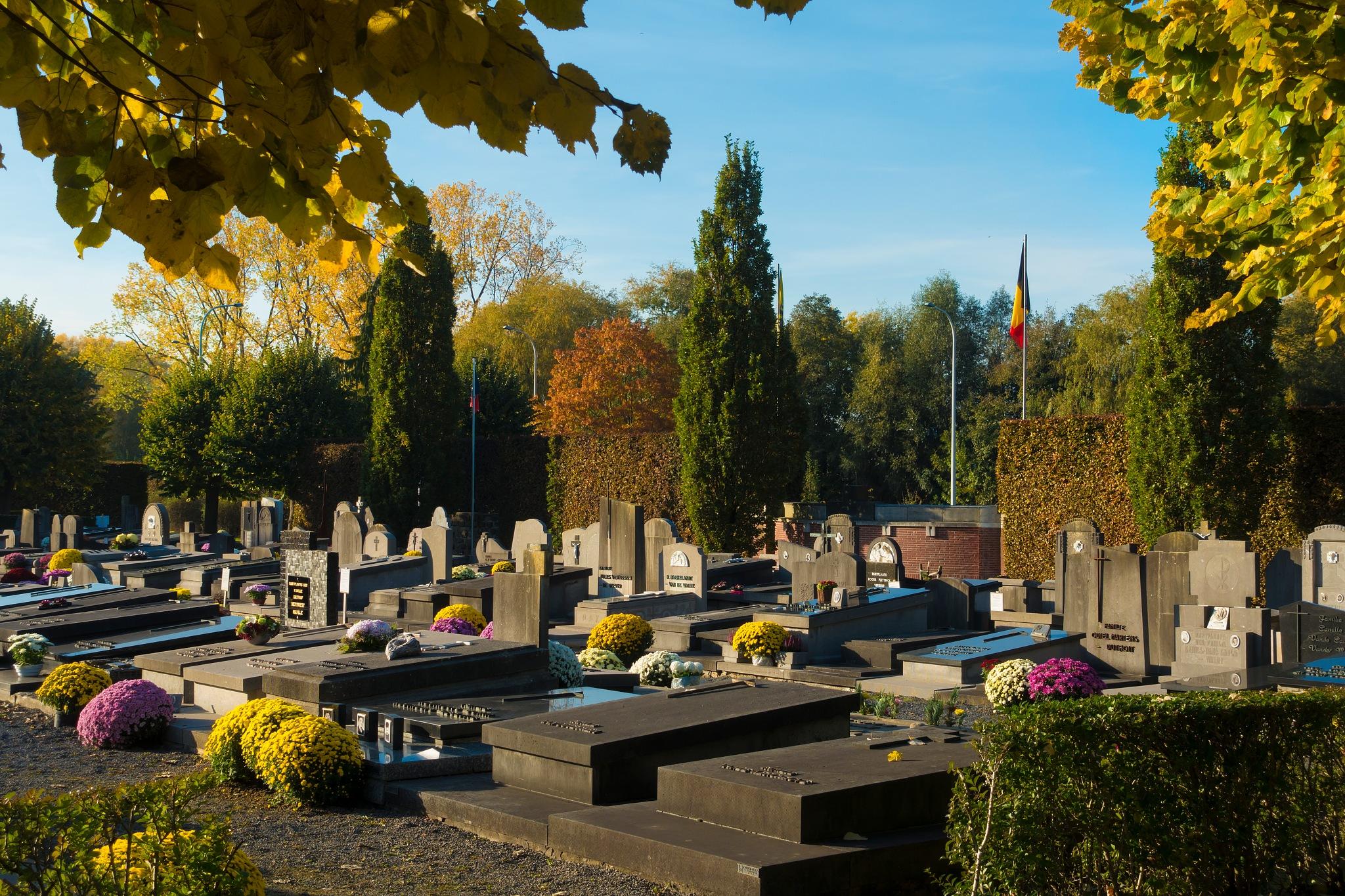 kerkhofblommen by Renaat